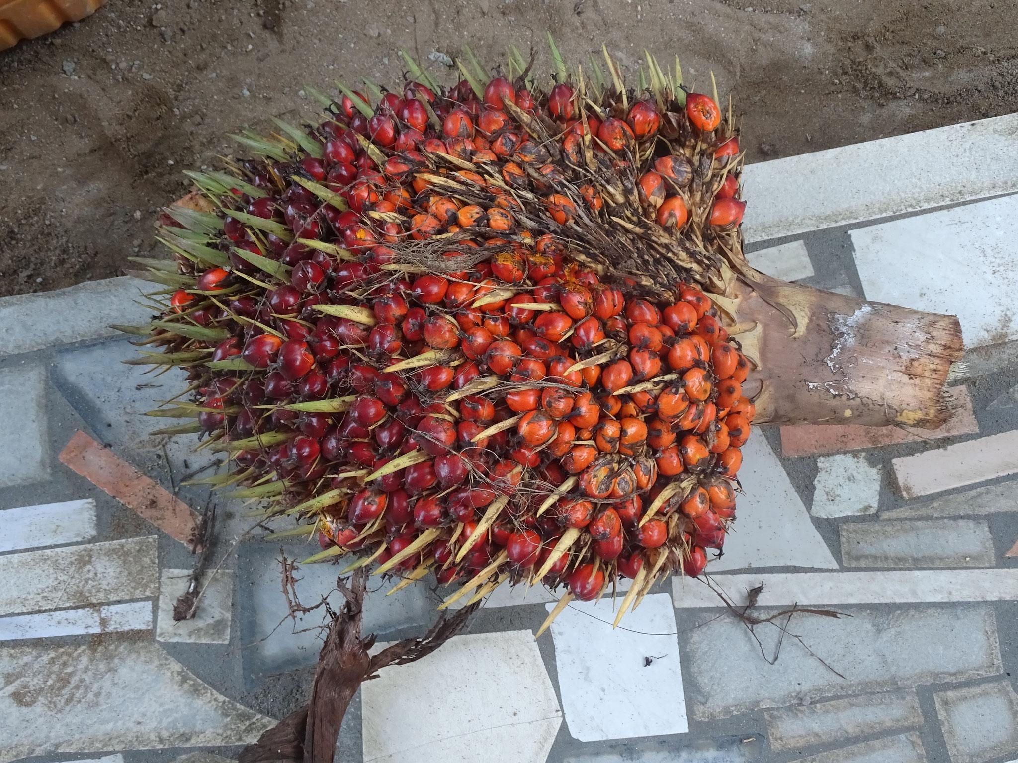Frisch geerntetes Palmöl.