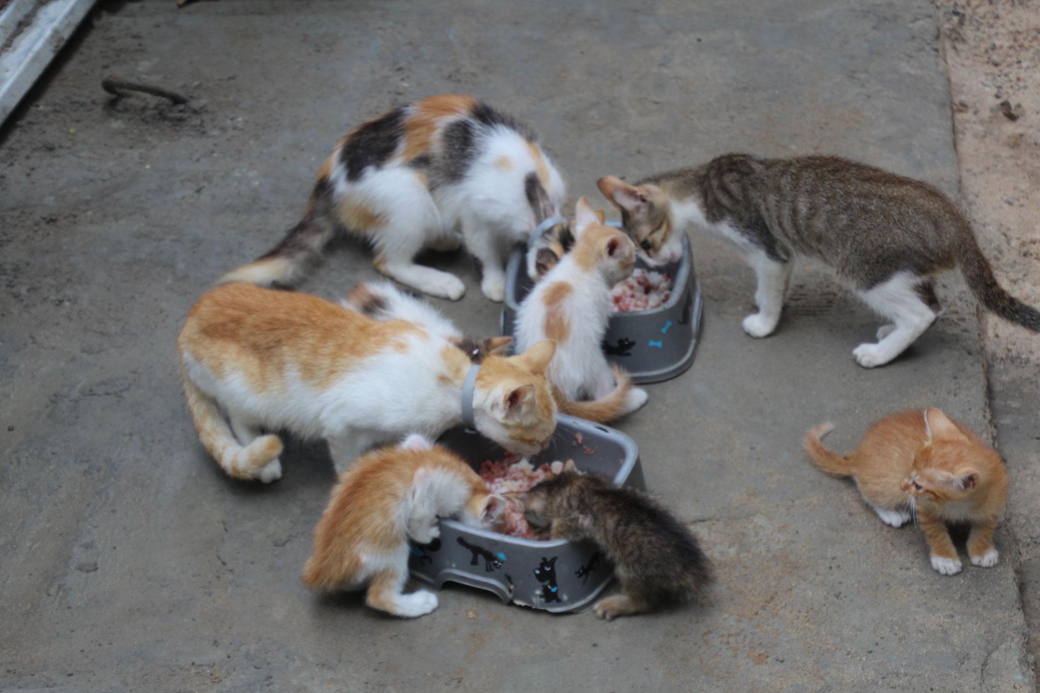 Ein teil unserer Katzen.