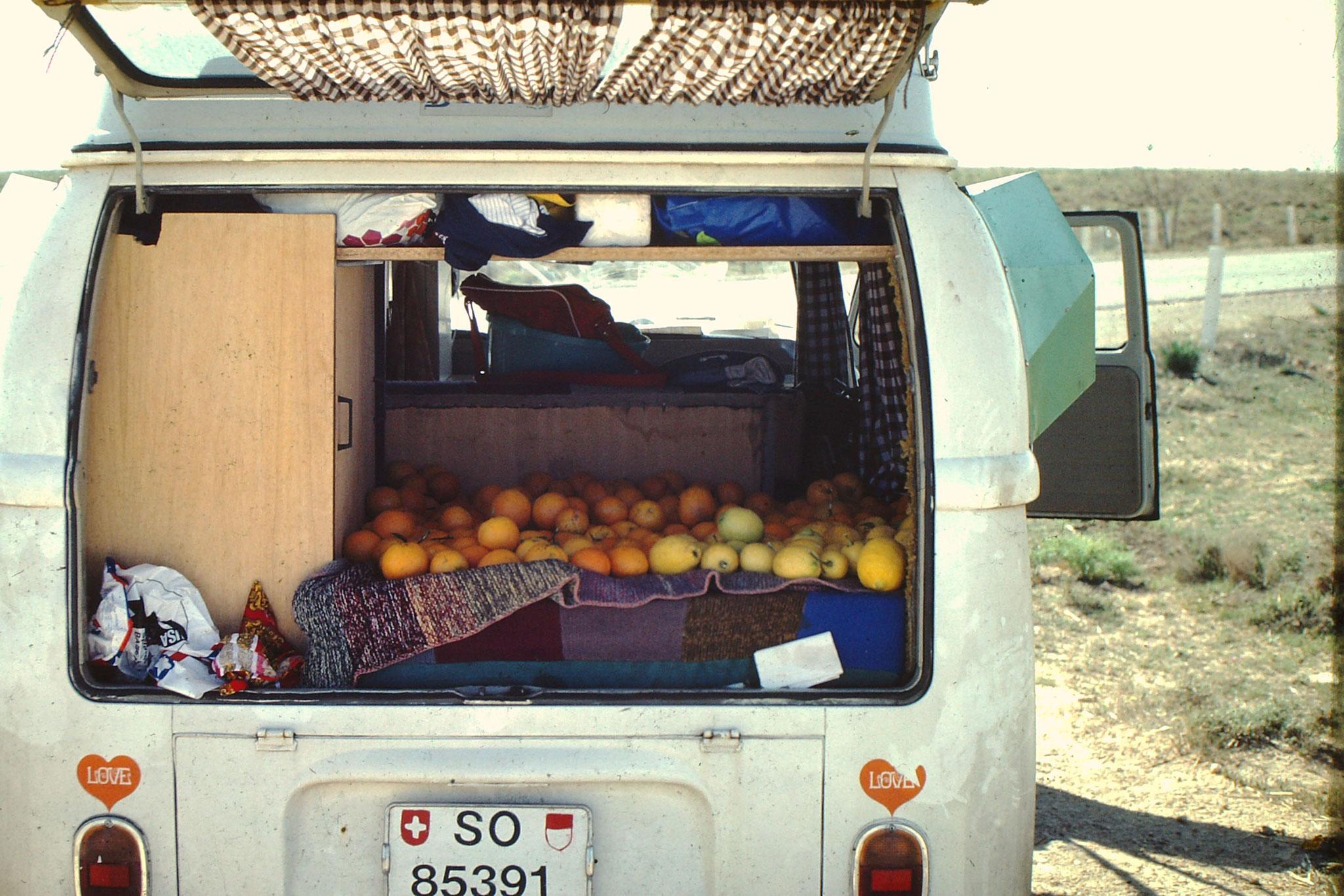 Vor der Weiterreise kauften wir Orangen und Zitronen als Vitaminspender für die Sahara.