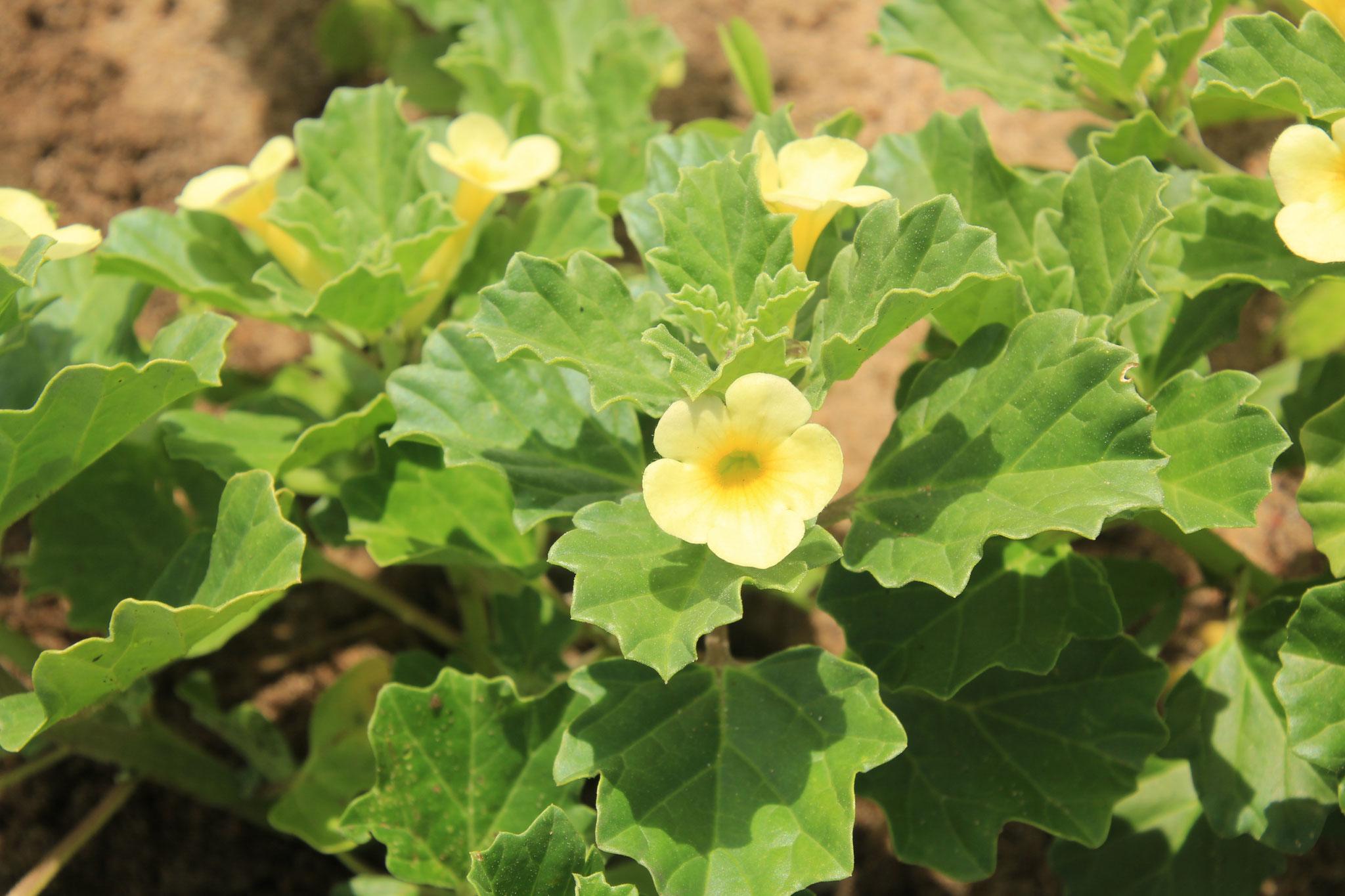 Wenn ich kleinere schöne Pflanzen sehe, Pflanze ich sie auch in meinem Garten.