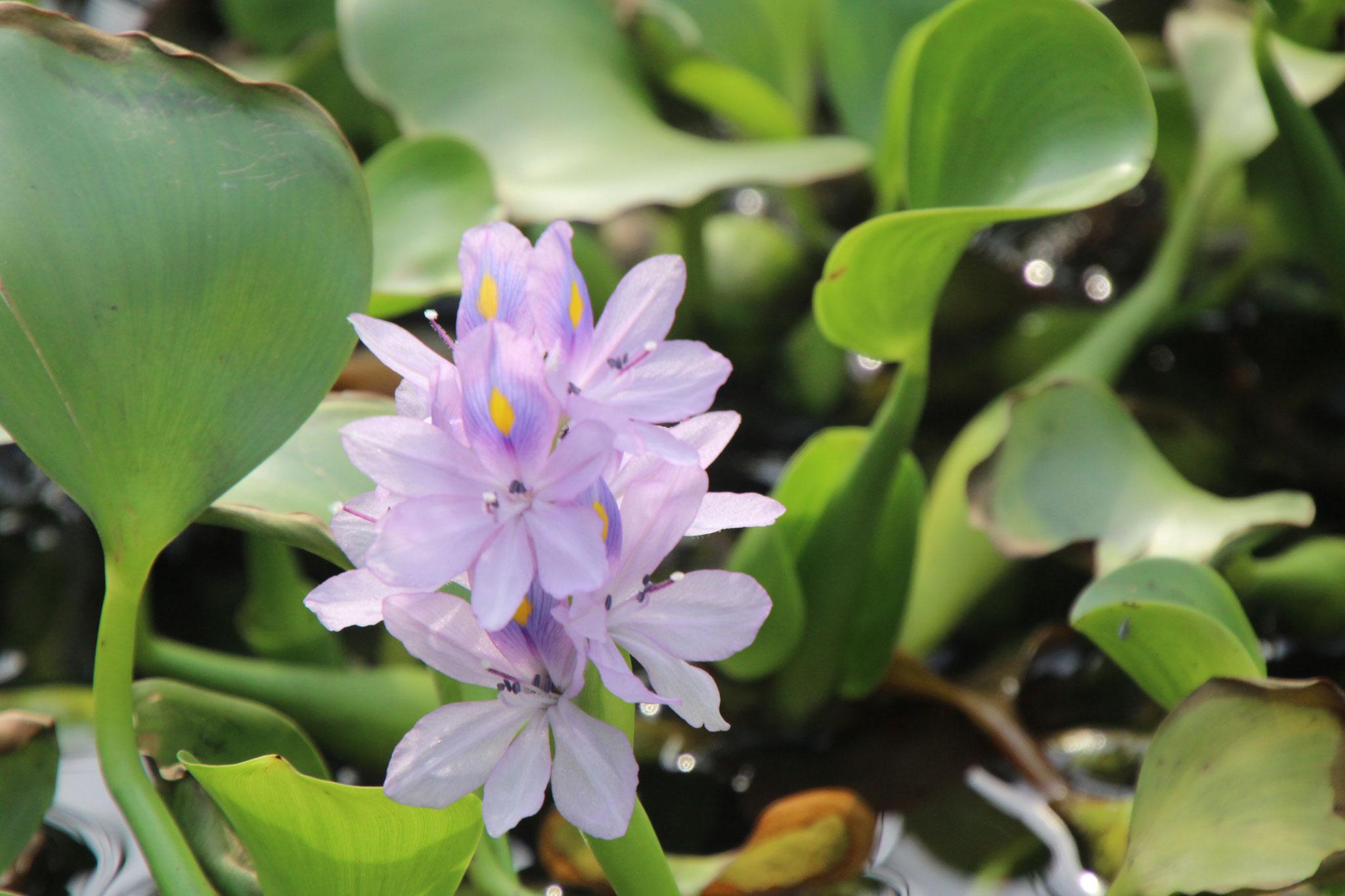Einzelne Blume.