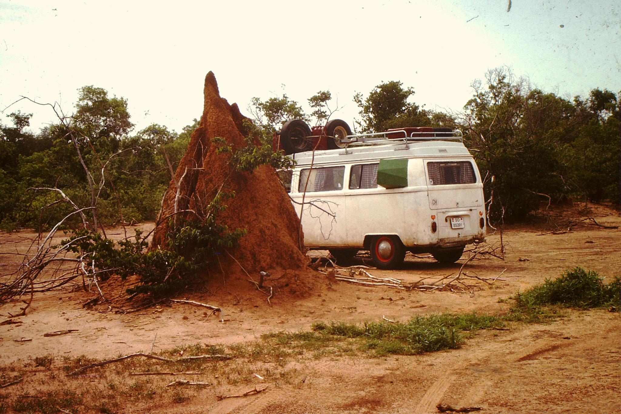 1. Die Termitenhügel sind oft sehr gross. Verlassene Termitenhügel dienen auch als Nistplatz für Vögel und andere Kleinlebewesen. Die Hügel sind sehr hart und überstehen auch die Regenzeit.