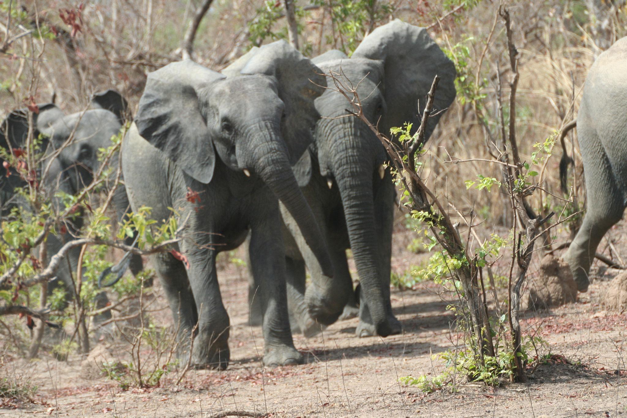 20. Elefanten