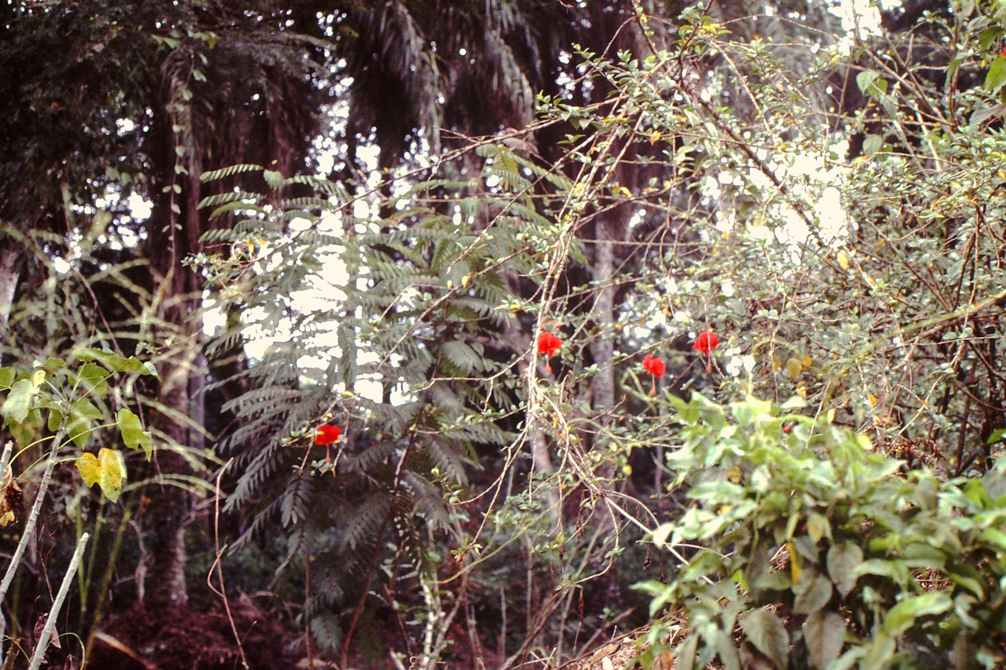 Immer  wieder fanden wir schöne Pflanzen.