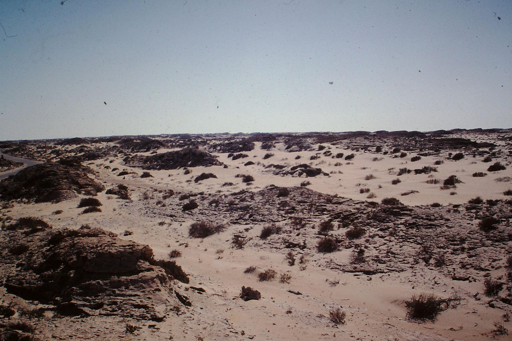 Landschaft in Westsahara.
