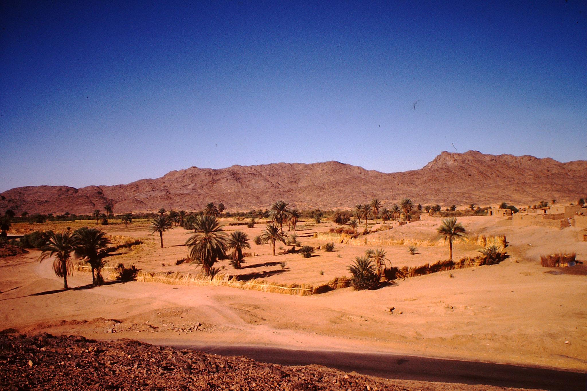 24. El Golea ist die Stadt der 200'000 Dattelpalmen.