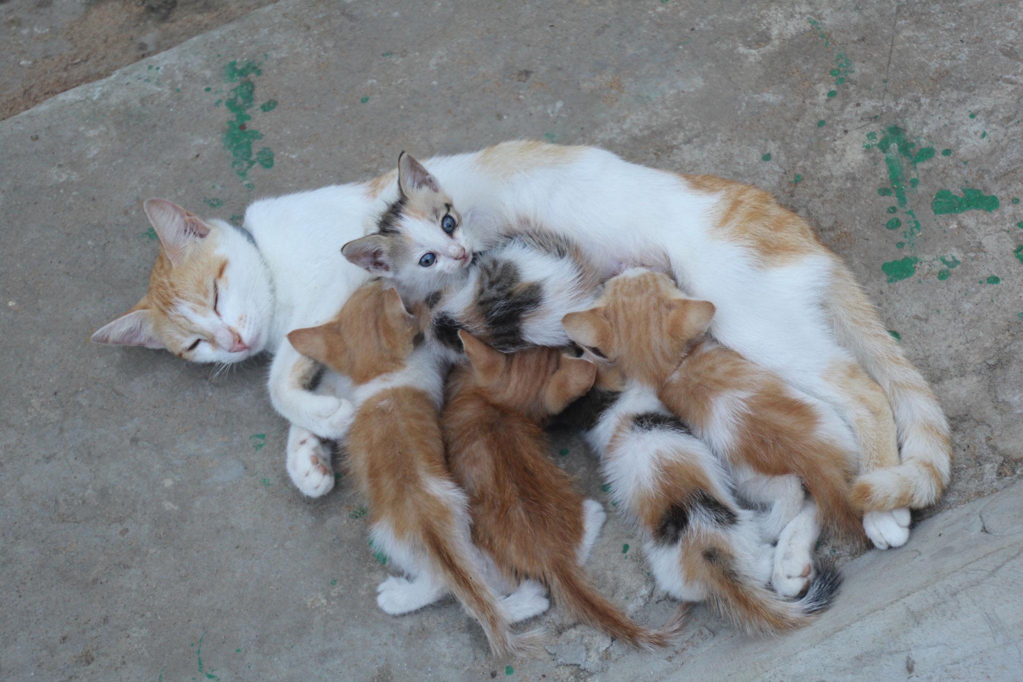 22. Unsere Katze Bella mit ihren 5 Jungen.