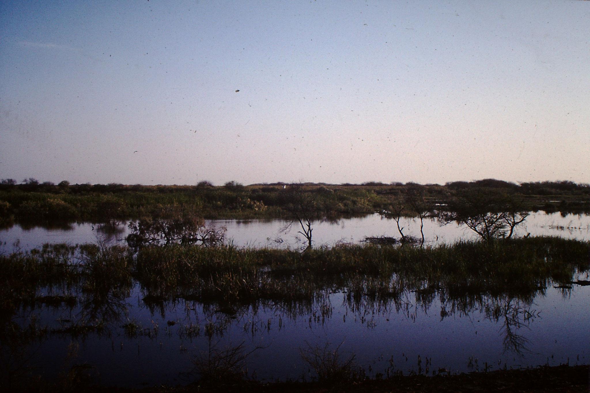 Im Feuchtgebiet an der Grenze  Senegals.