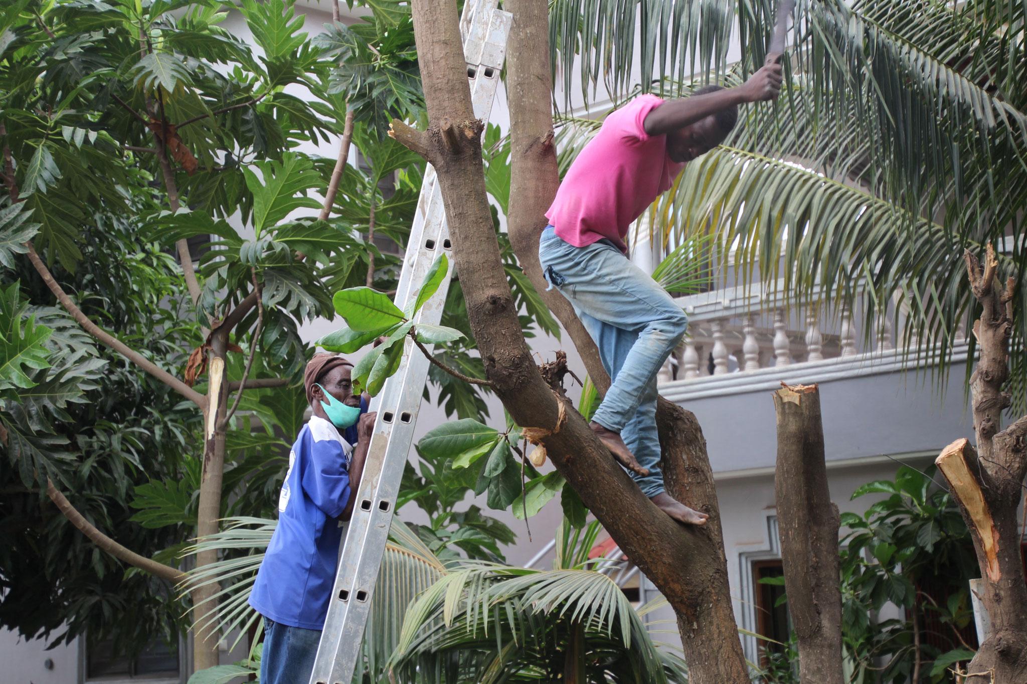 Venavie der Maurerlehrling hilft dem Gärtner.
