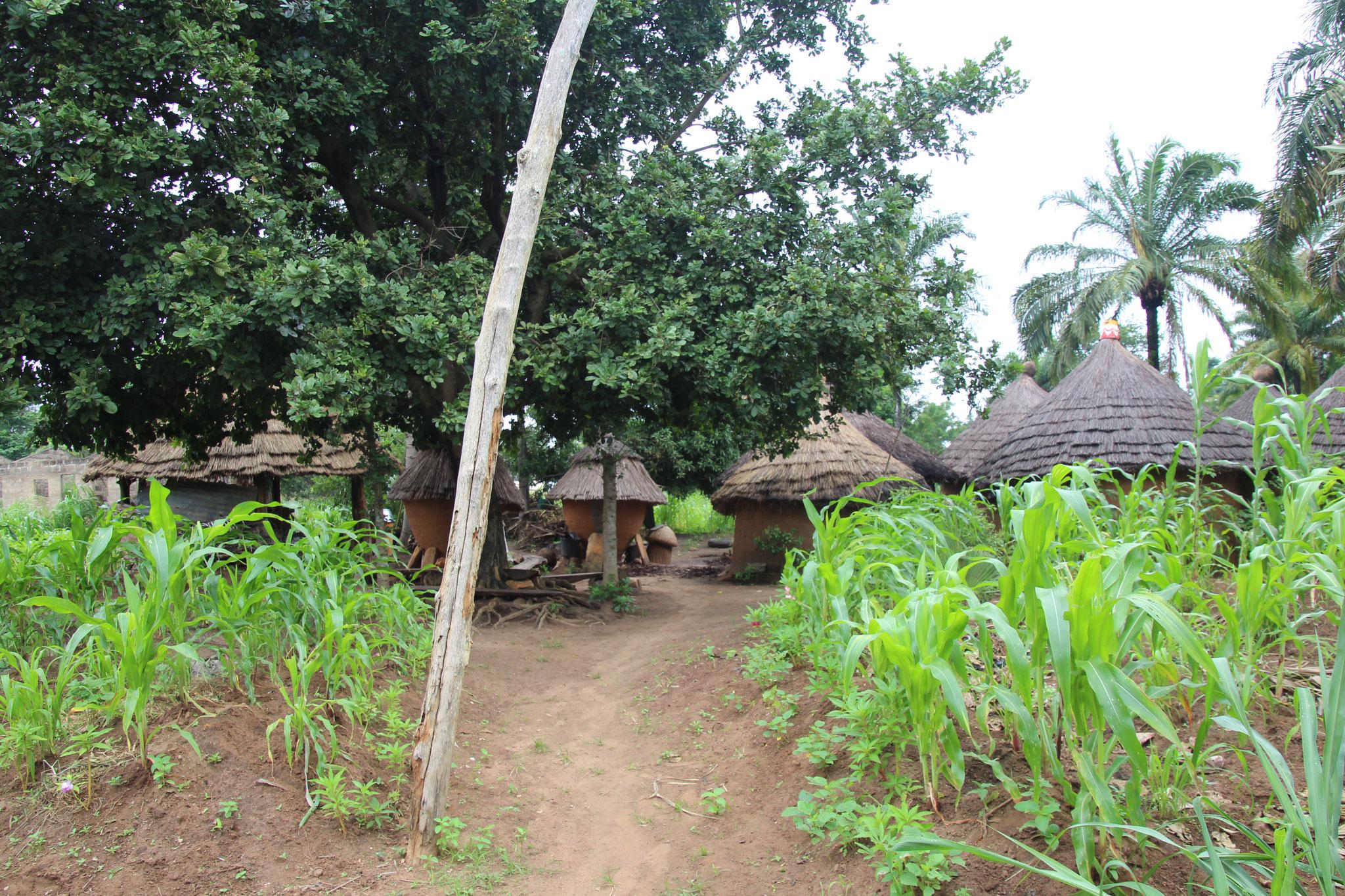 18. SIDAP Landwirtschaftlicher Musterbetrieb bei Lama Kara.