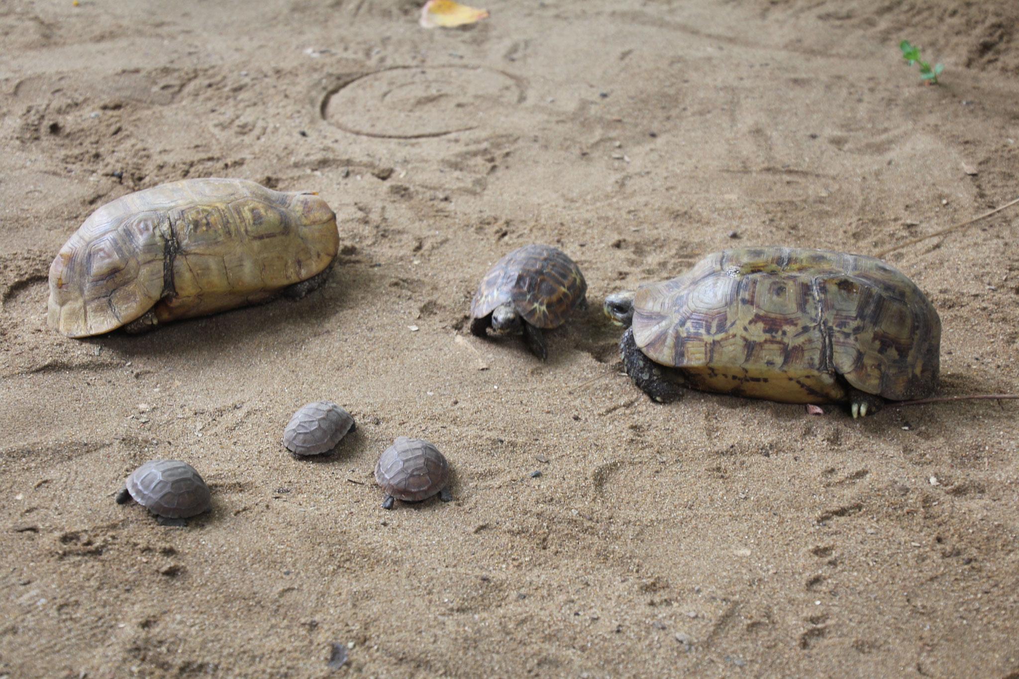 17. Schildkrötenfamilie oben links ist der Vater.