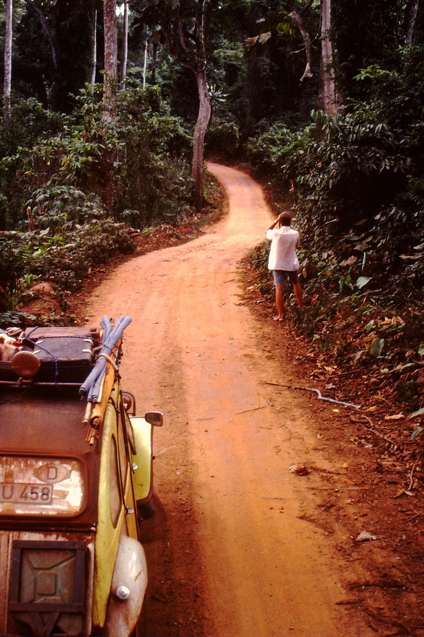 Piste durch den Regenwald im Bia Game Reserve. In diesen Wald gibt es eine Population an Waldelefanten.