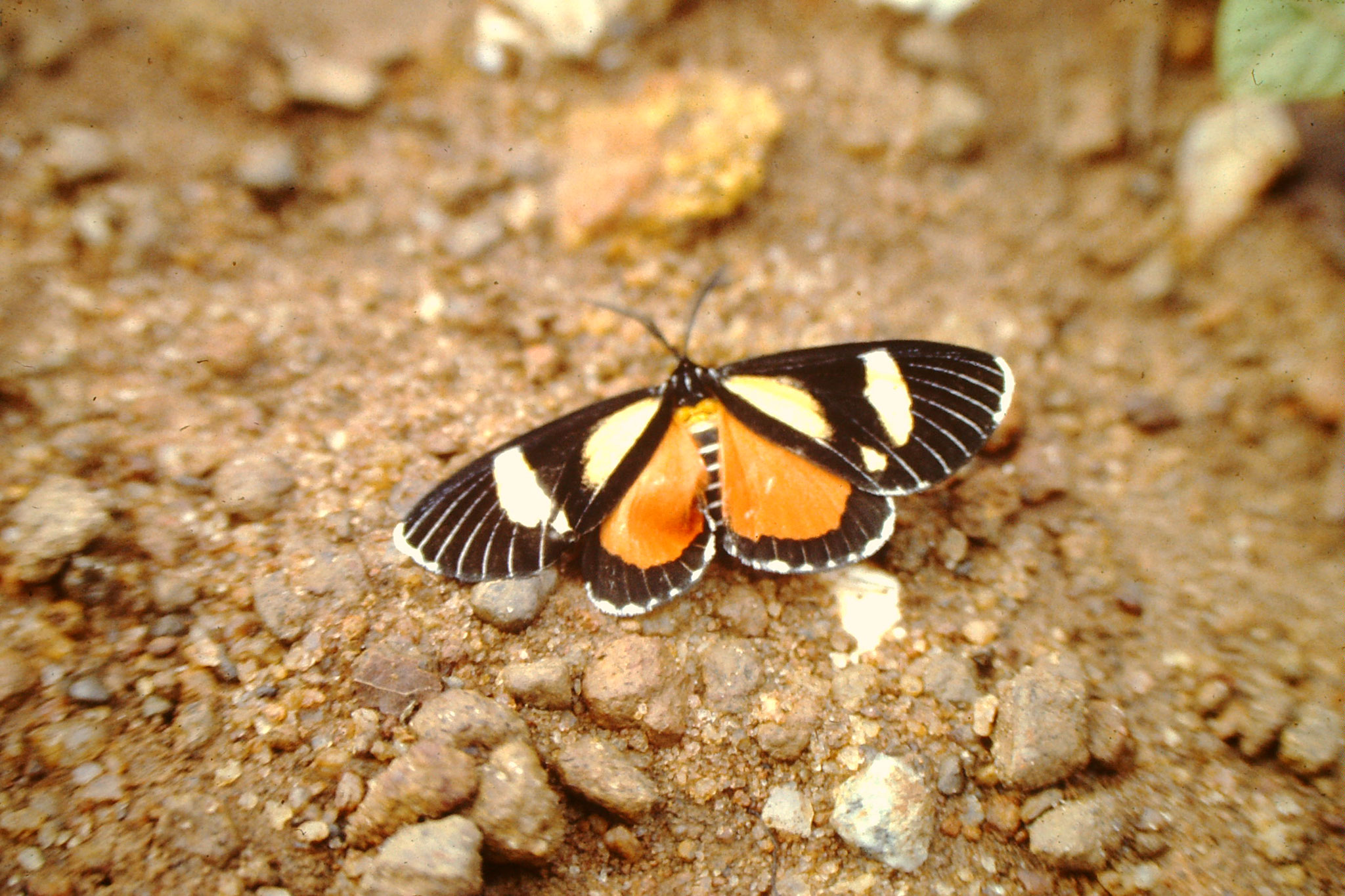36. Schmetterling