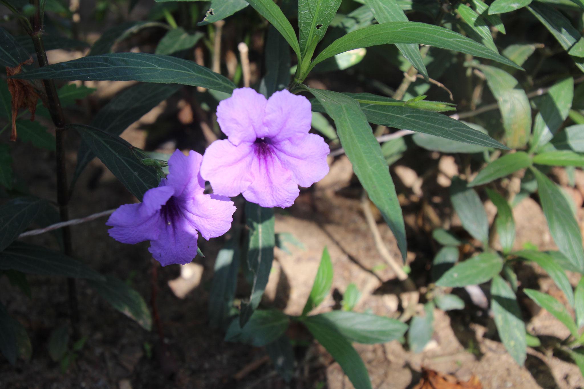 Diese Blume gibt es auch in Viollet, Rosa und Weiss.