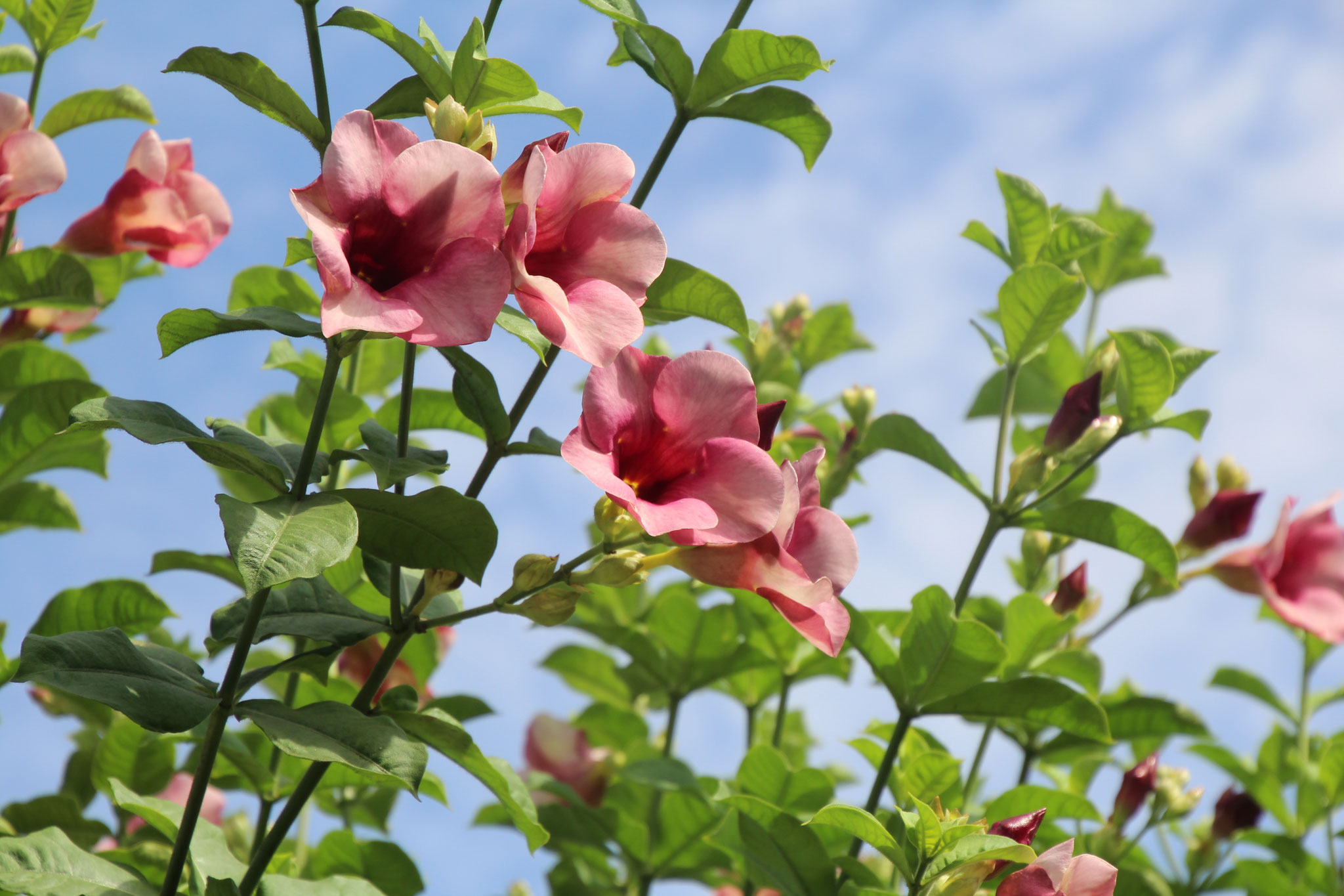 Solche Blumen haben wir in vielen Farben.