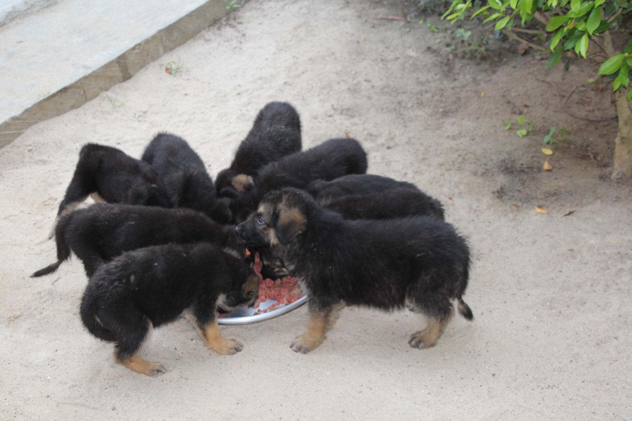 Nur beim Fressen bringt man alle zusammen auf das Foto