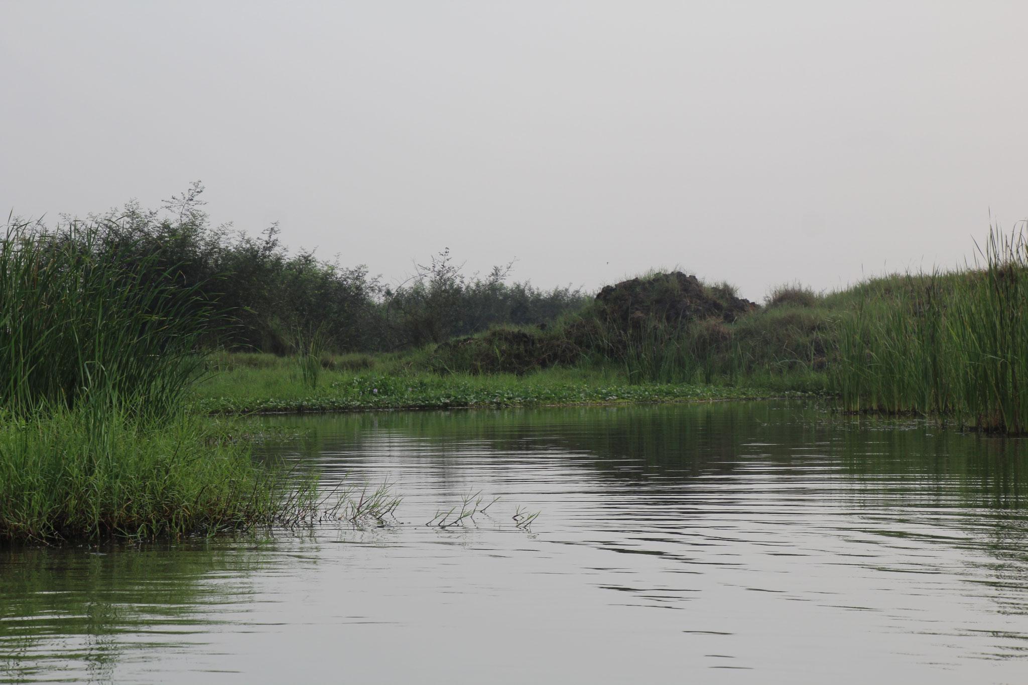 Der Übergang vom See zum Feuchtgebiet und Wald.