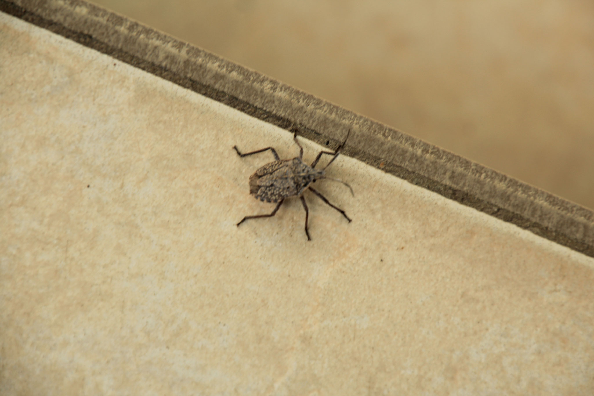 Ein etwa 5 mm grosser Käfer.