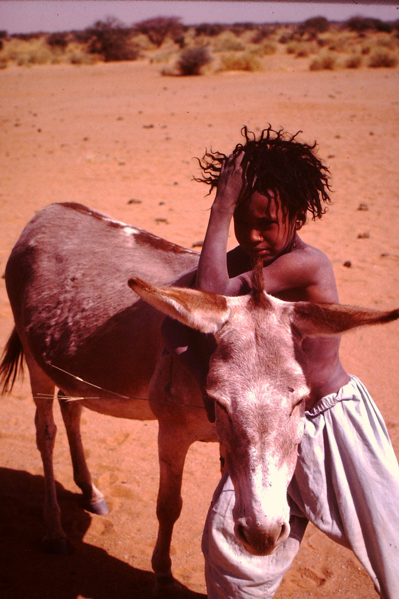 Touareg Knabe mit Esel.