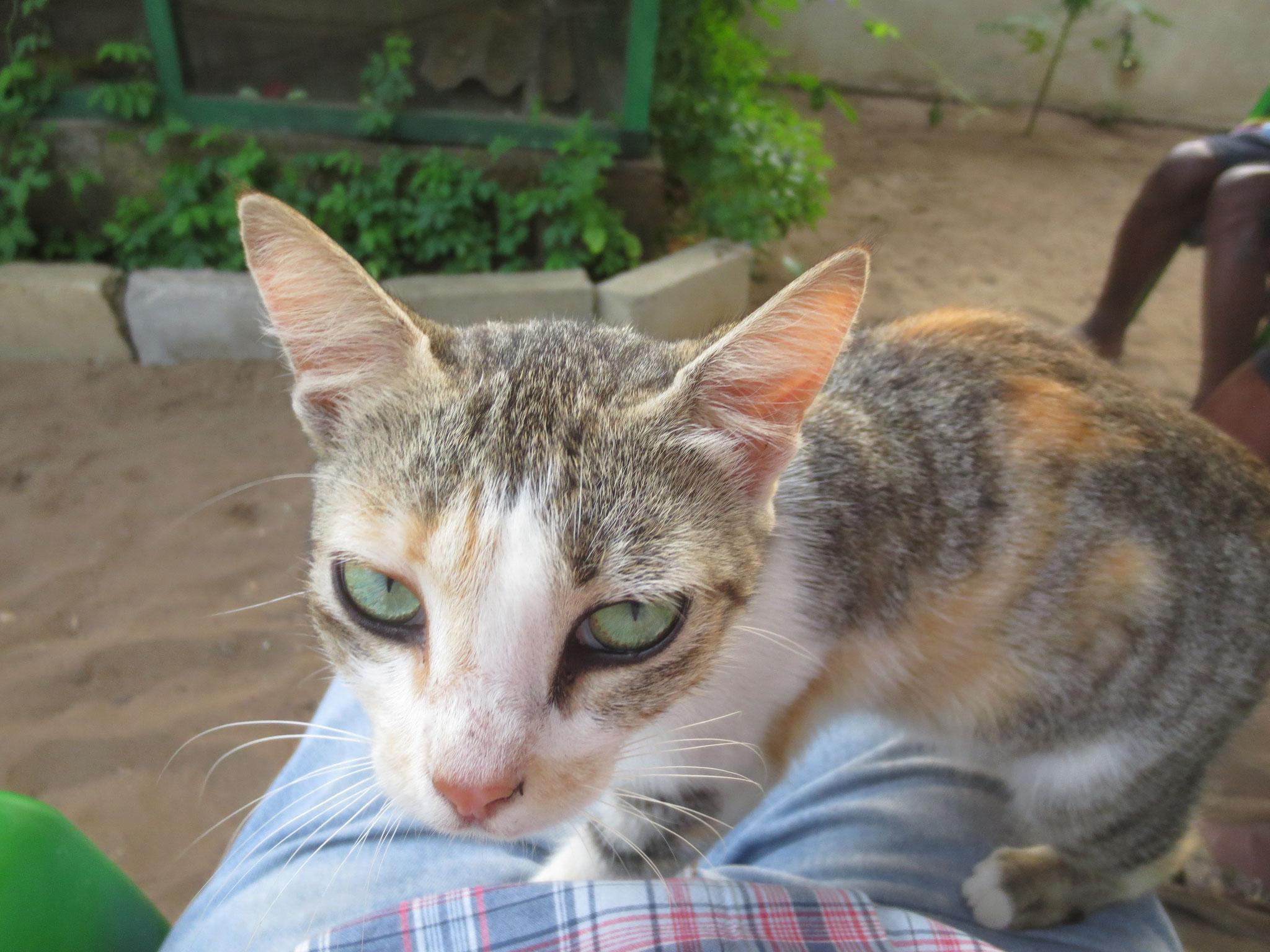 Unsere Katze ertrank am Freitag dem 13.10.2017