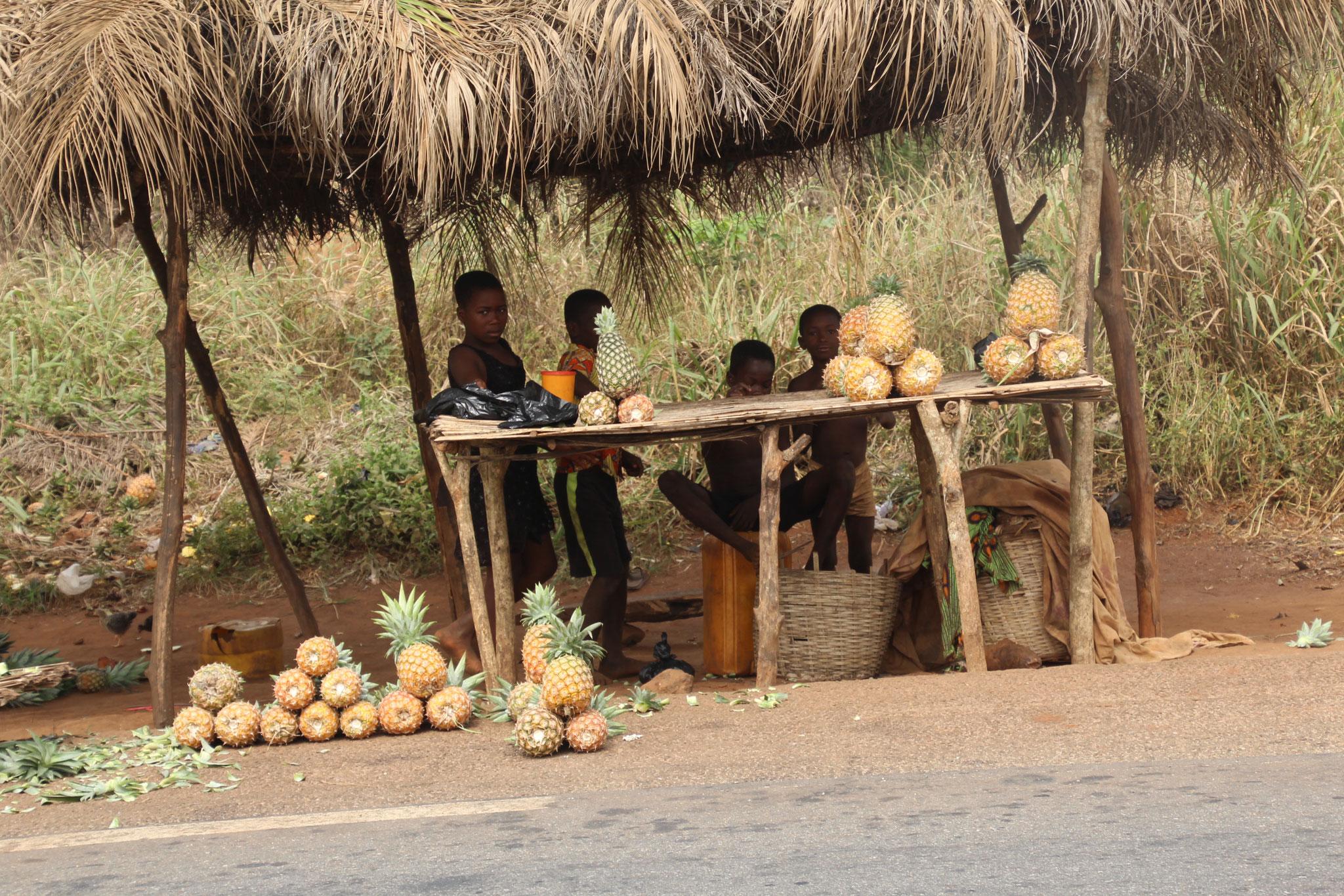 Bauernkinder verkaufen frisch geerntete Ananas.