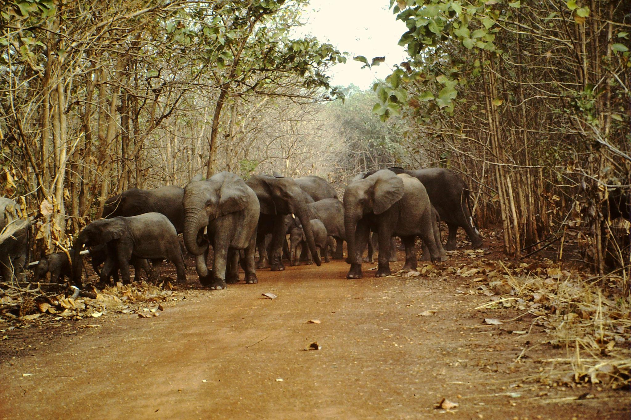 Elefanten.