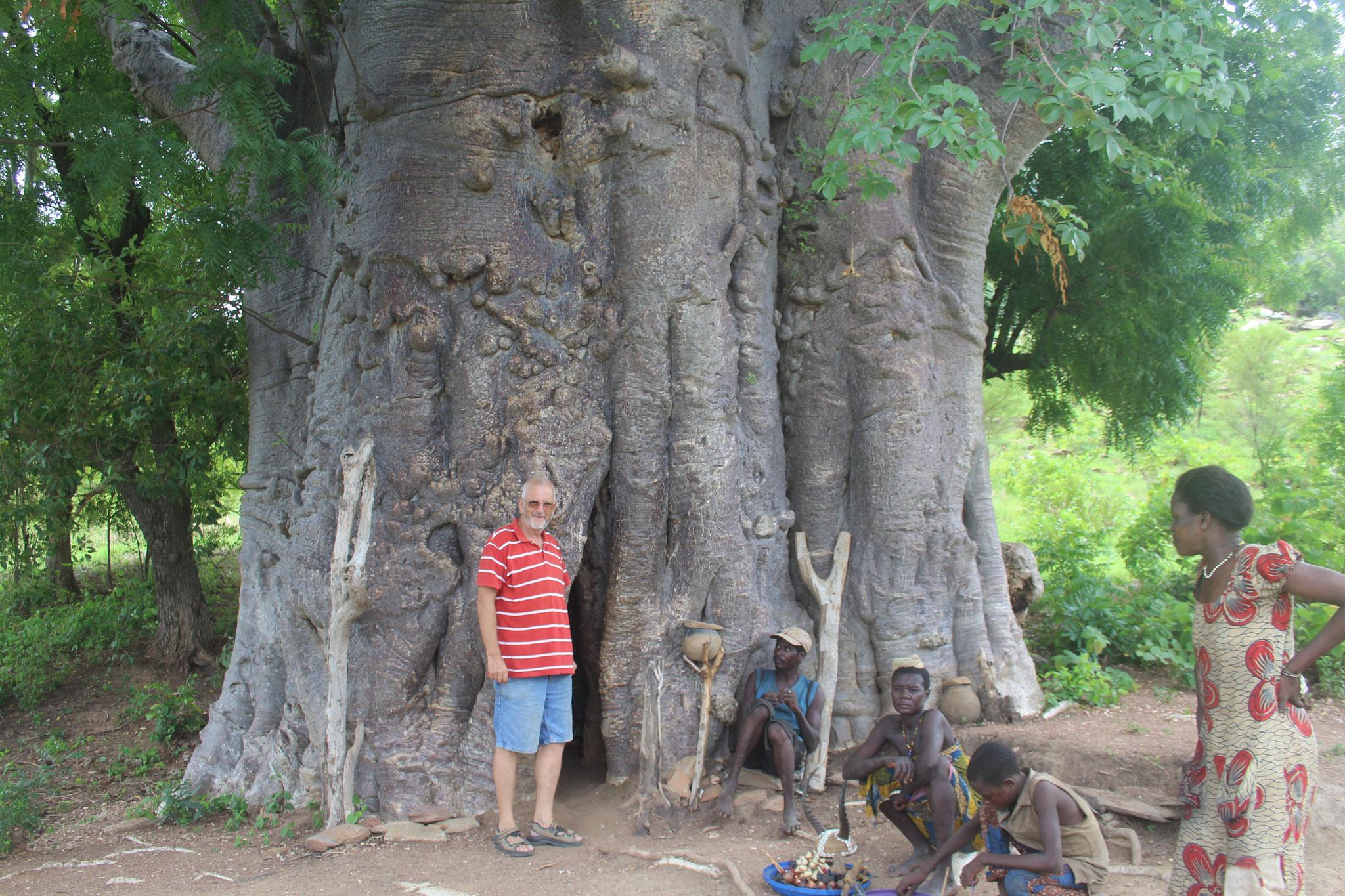 16. Der letzte bewohnte Baobab in Togo