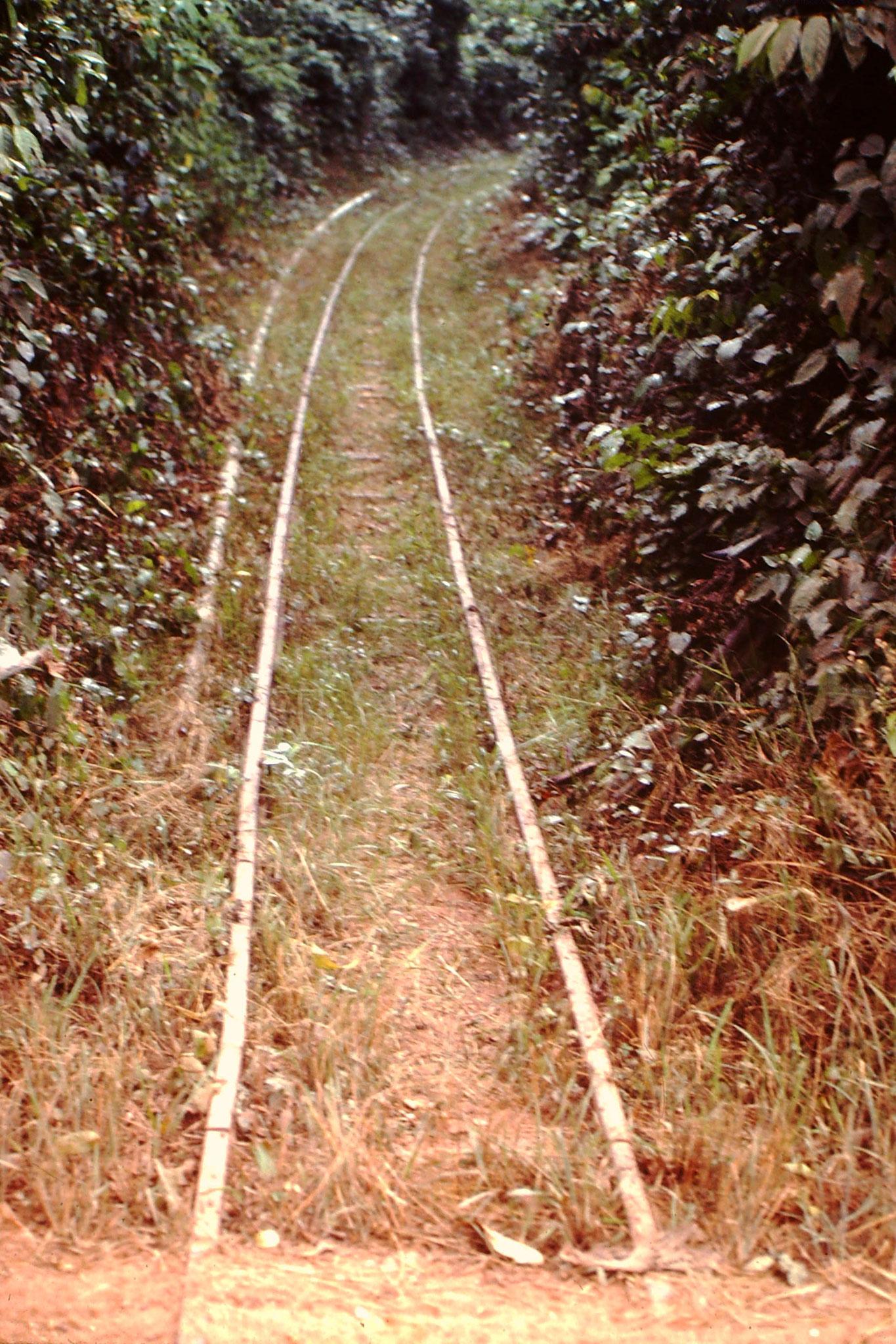 Dieses Geleise führt in den Urwald und wird ausschliesslich von der Forstwirtschaft zum abtransportieren der gefällten Bäume gebraucht.