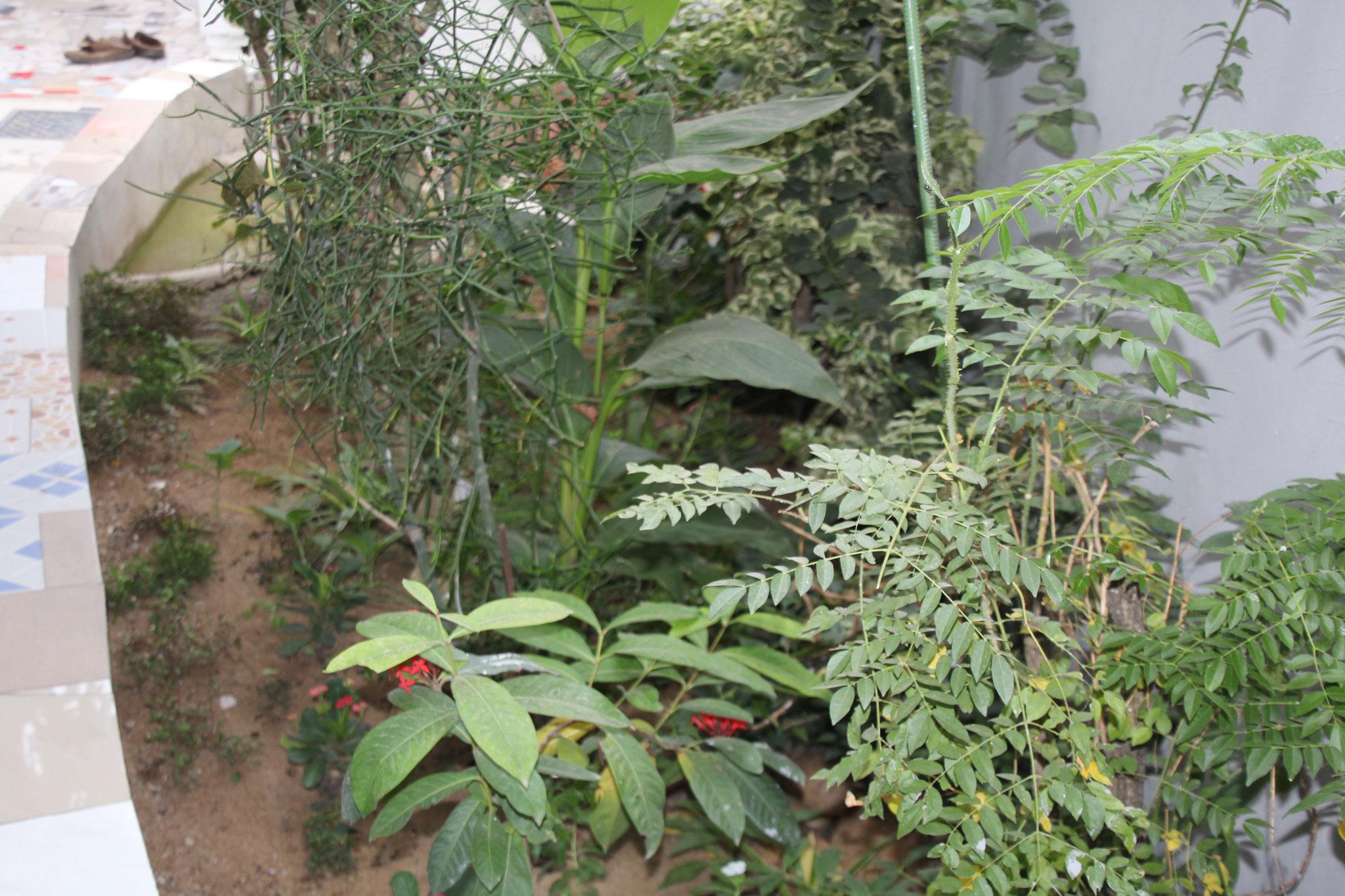 Hier wohnen unsere kignixys Schildkröten zusammen mit der Klappbrustschildkröte.
