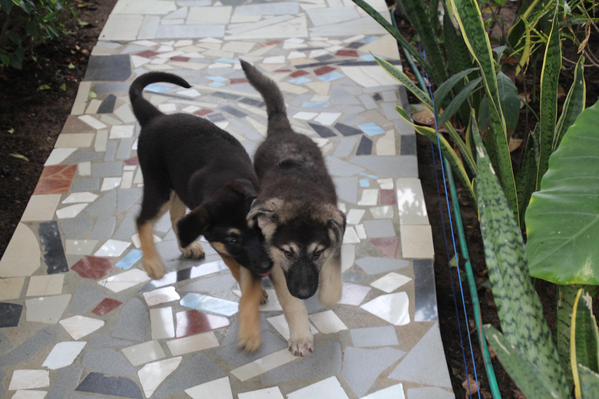 3. Leila und Chico.
