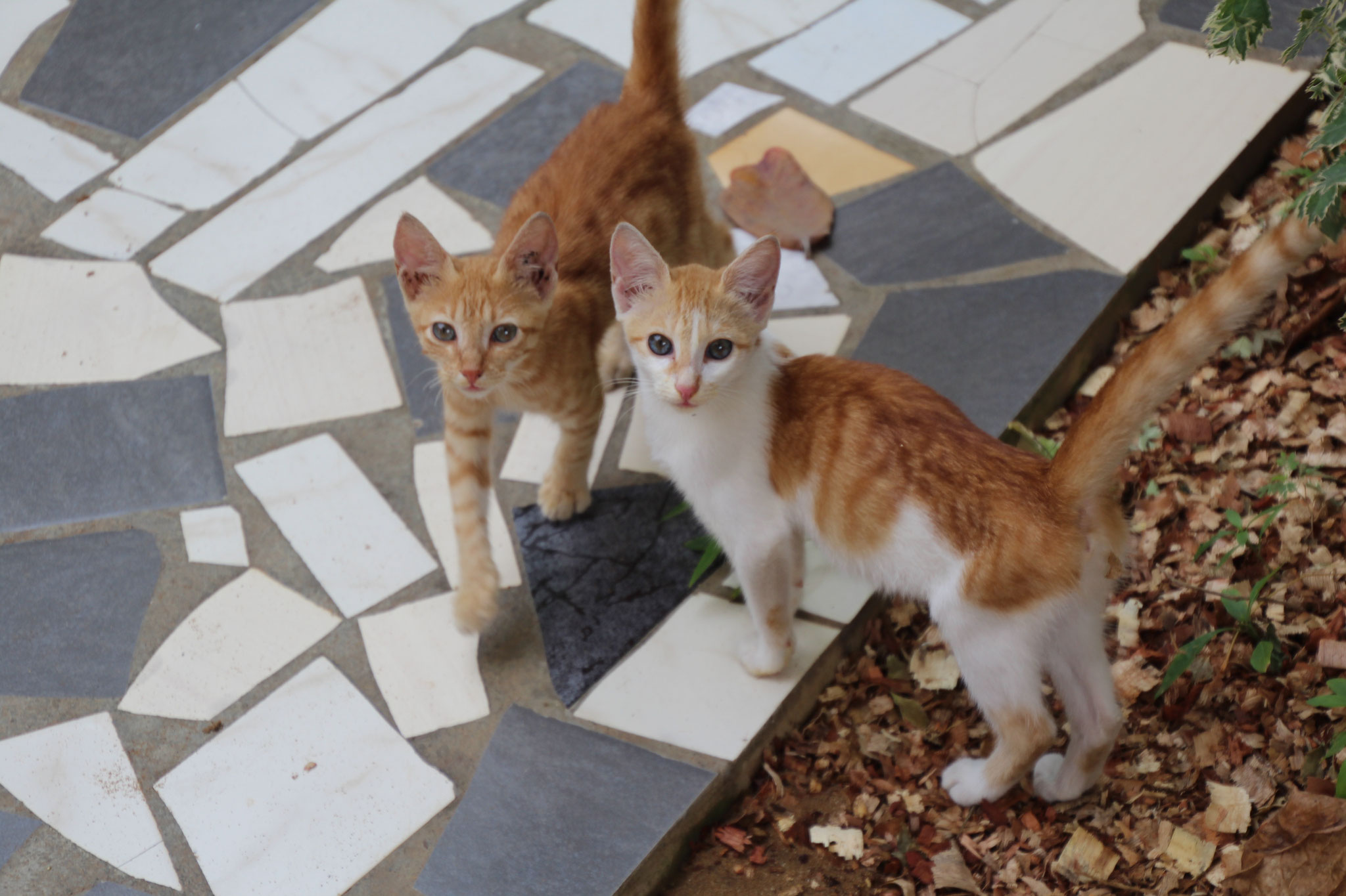 Carlo und Bella