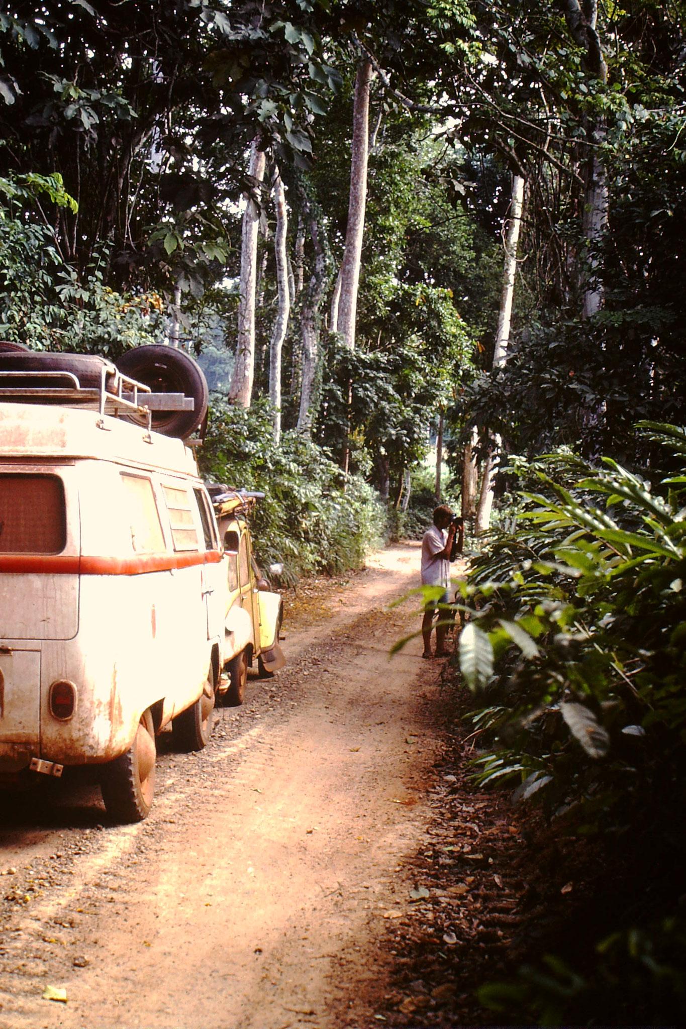 13. Schmale Piste zwischen Abengourou und Abidjan.