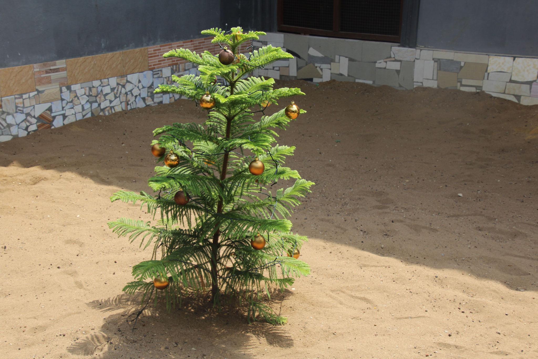 Unser echter Weihnachtsbaum in unserem Garten.