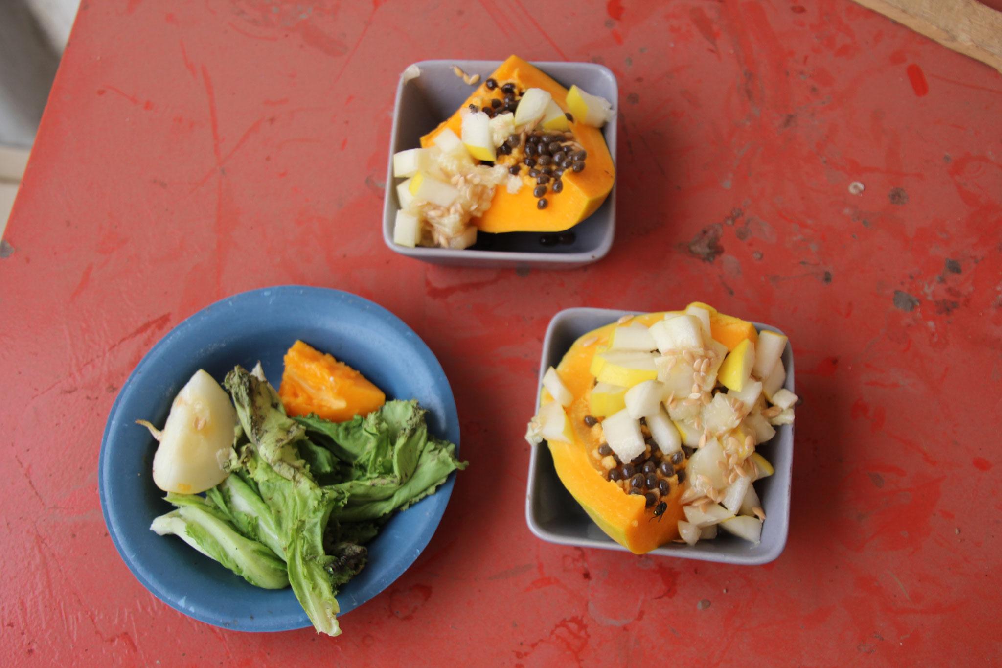 Futter für die Schildkröten und die Tourakus