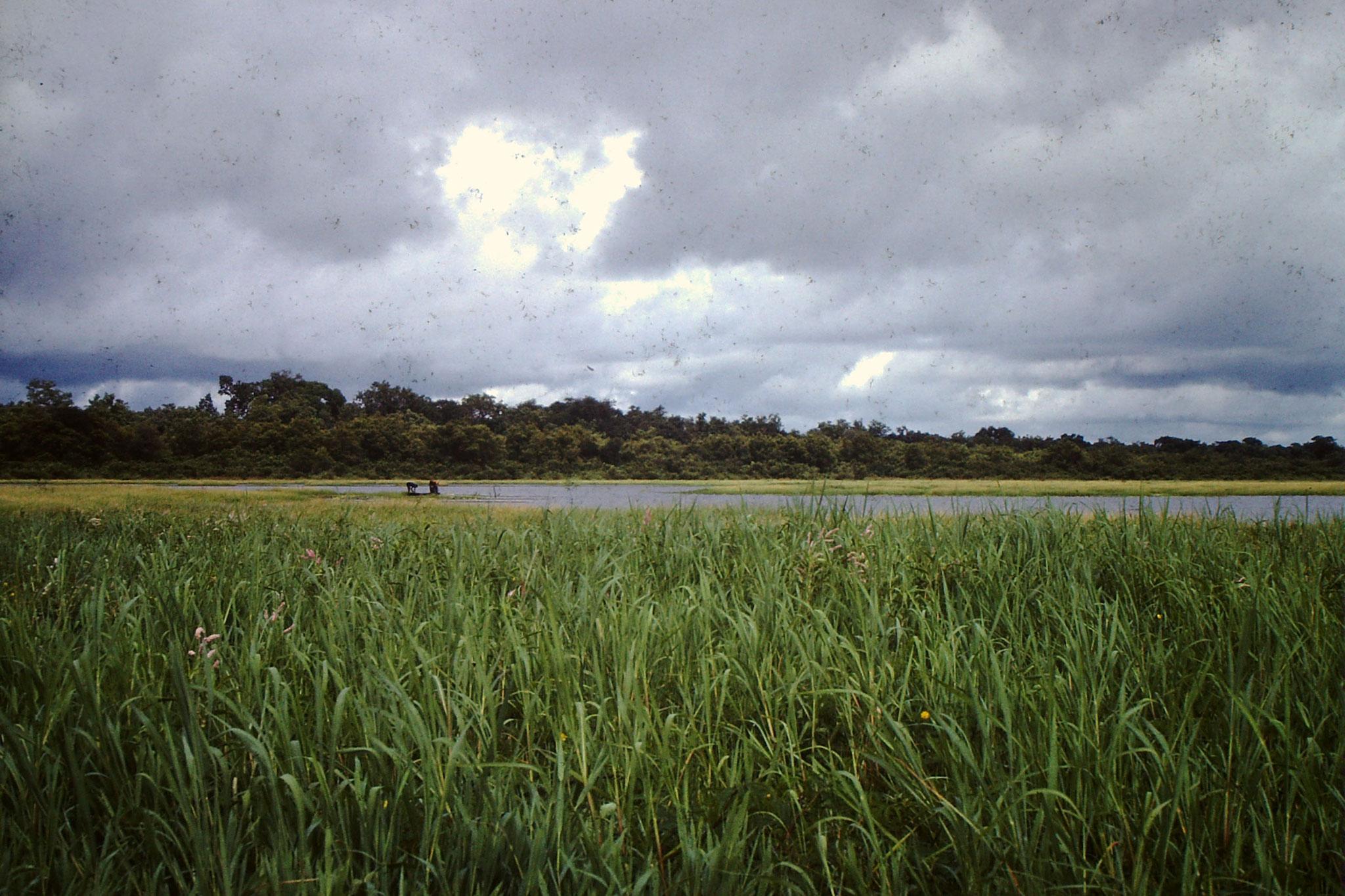Der See bei Bobo Dioulasso.