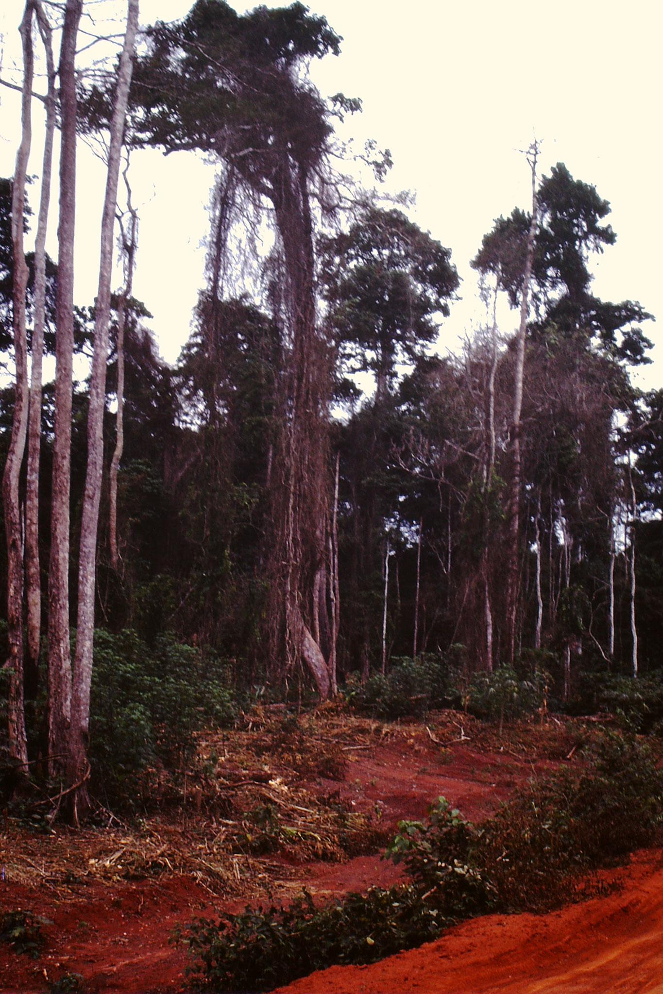 Mangrovenwald.