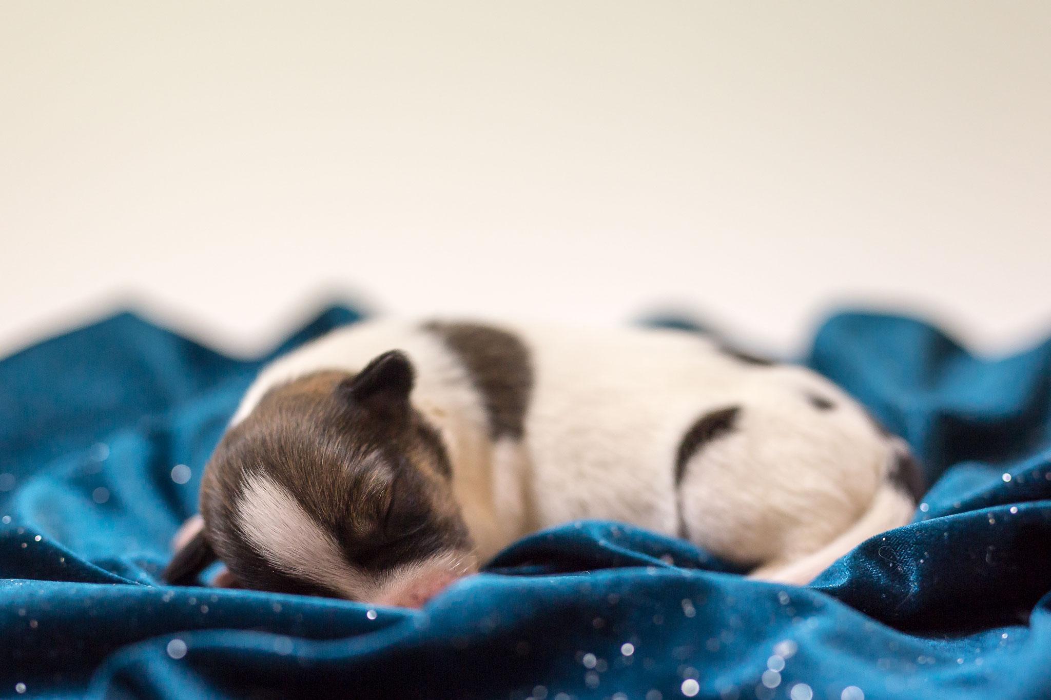 Clara 1 Woche alt