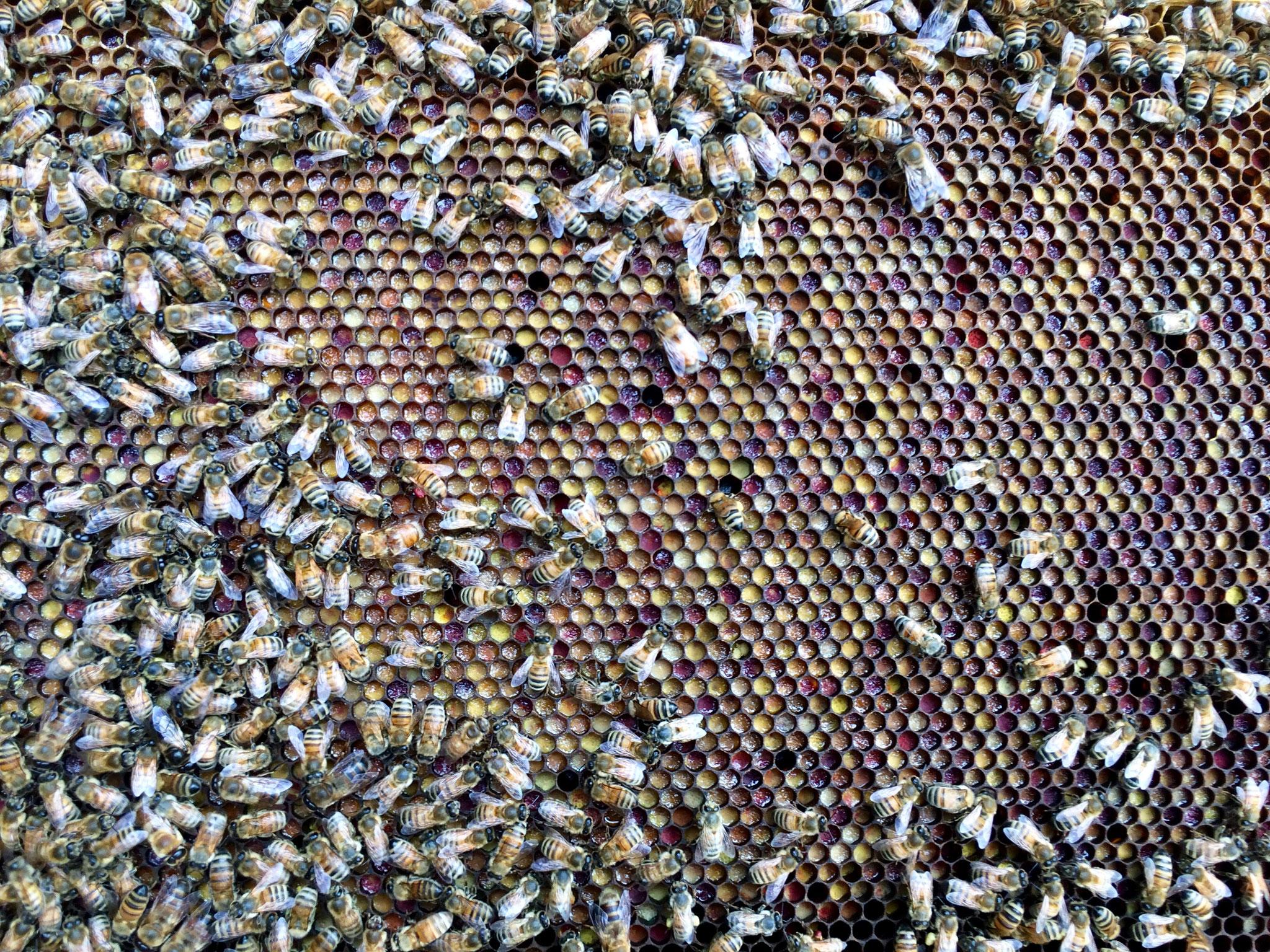 Pollen dans un cadre