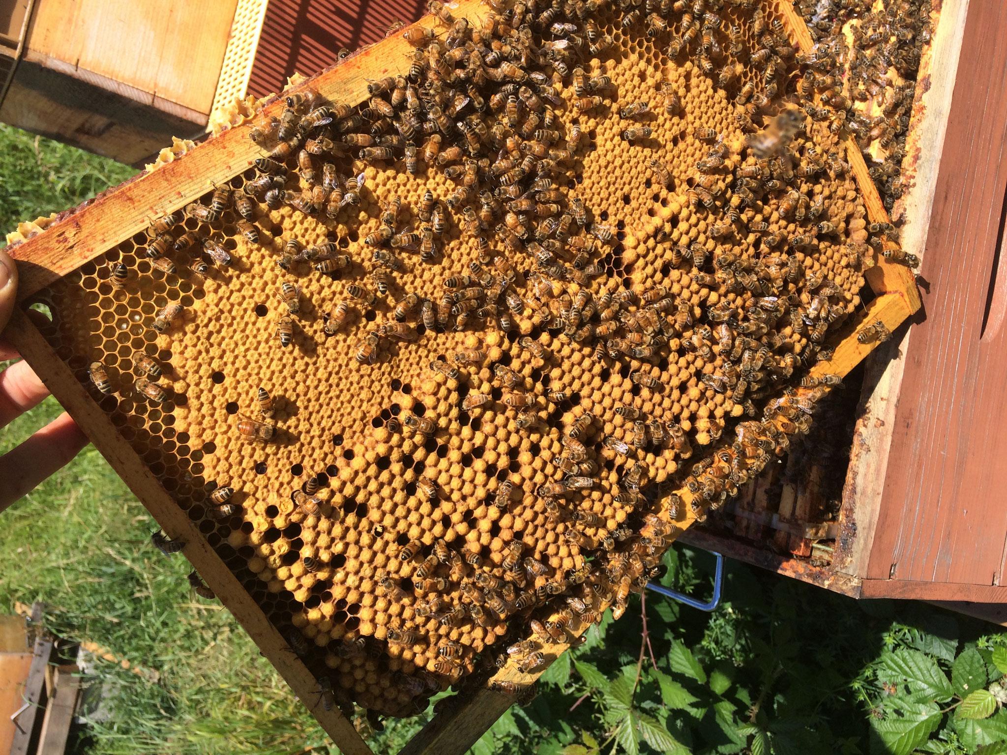Un cadre de ruches