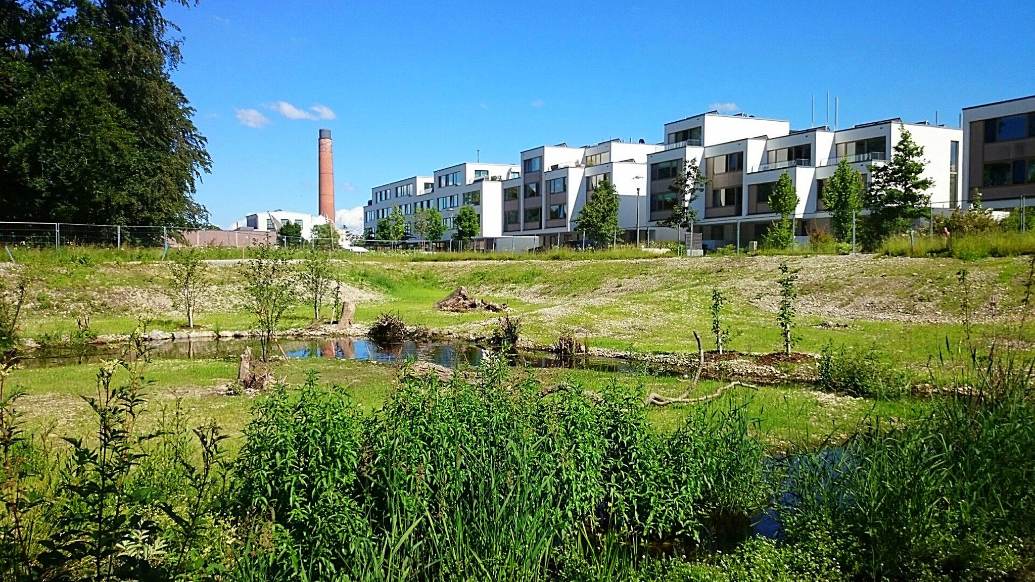 Filzbach: Aufweitung, Hochwasserschutz und ökologische Aufwertung
