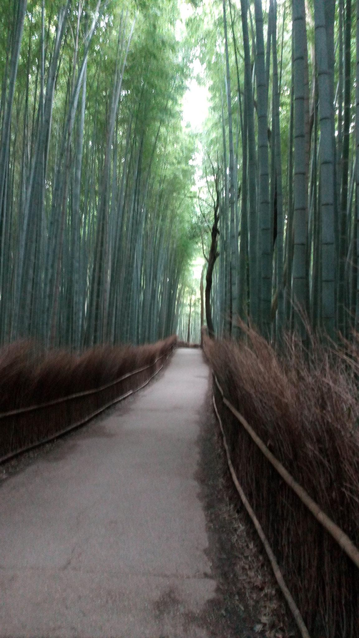 早朝の「竹の道」