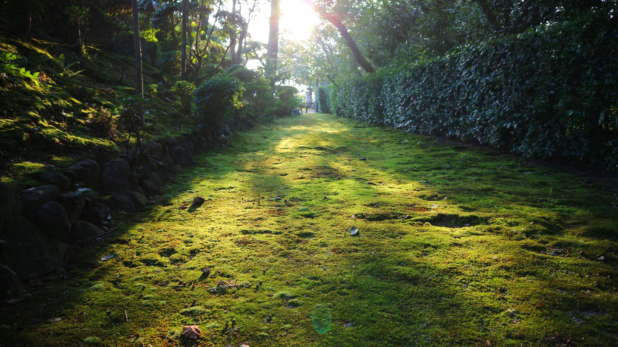 境内脇の苔庭