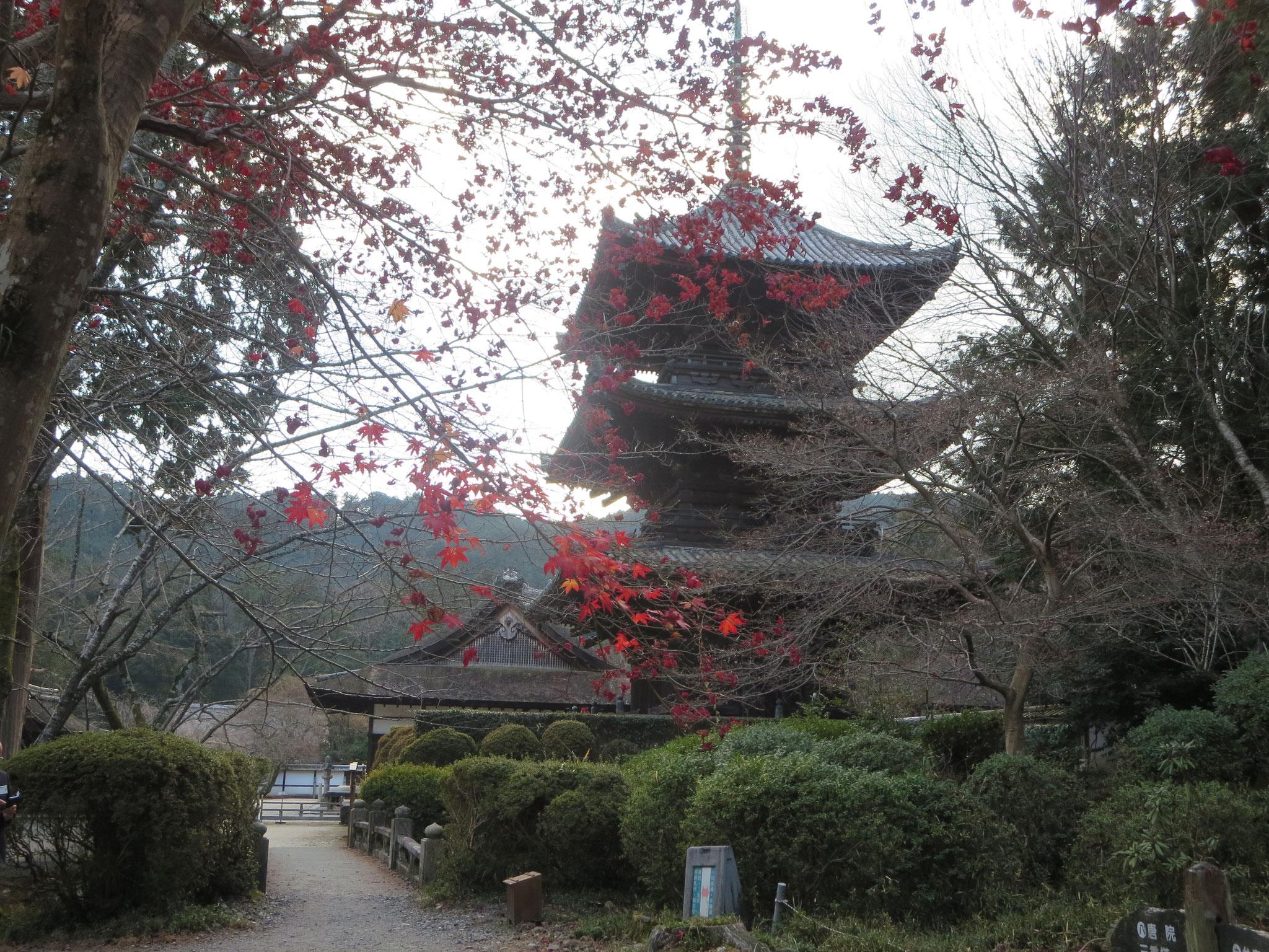 唐院 三重塔  室町初期の建築、秀吉が伏見観月橋下に移築した大和の比蘇寺の東塔を1600年に家康が寄進。