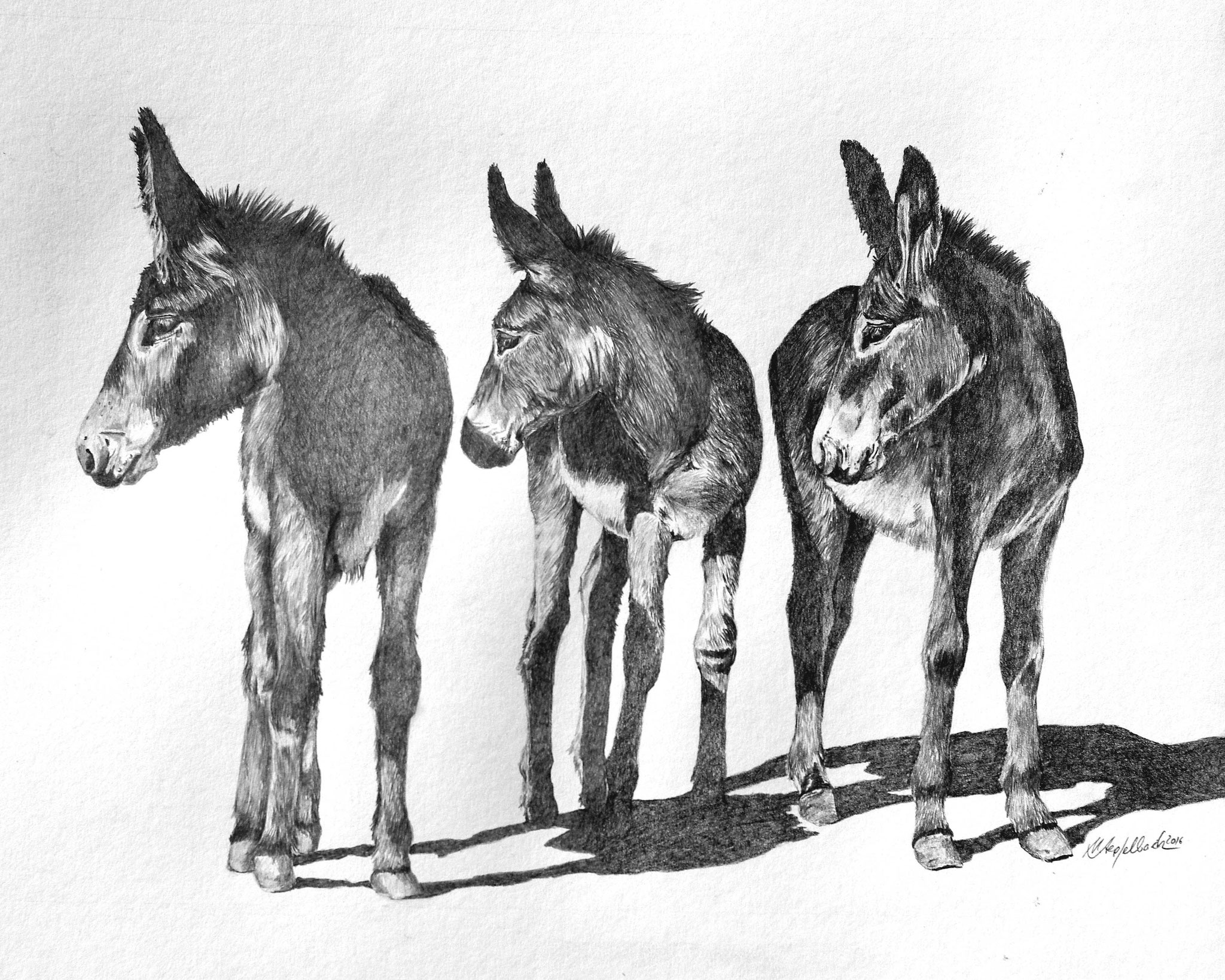 Drei Esel / Bleistift / 40 x 50 cm