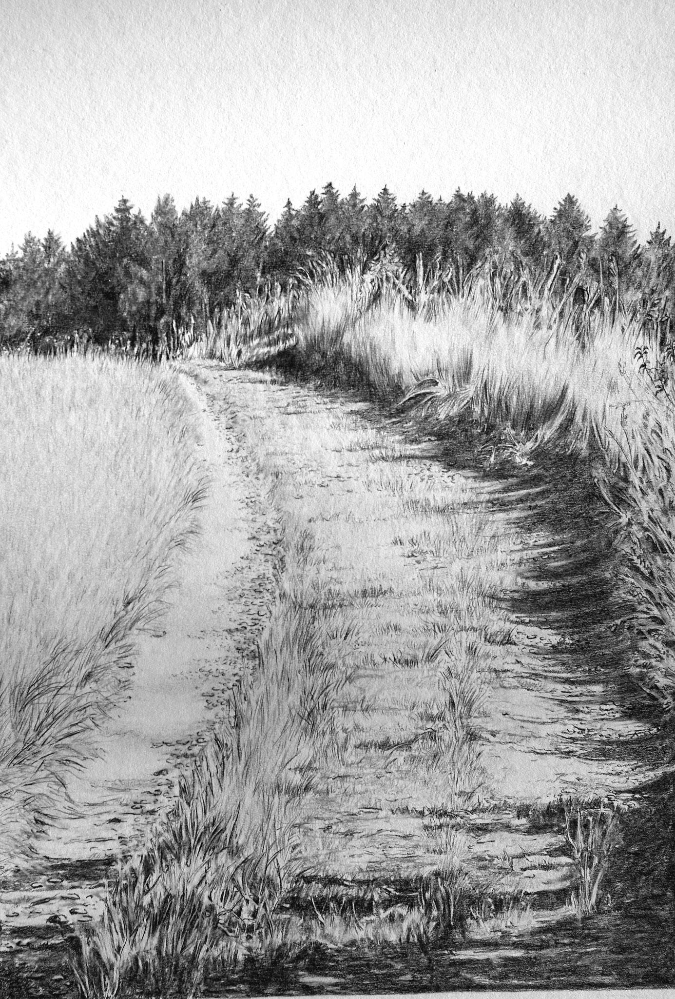 Feldweg / Bleistift / 40 x 50 cm