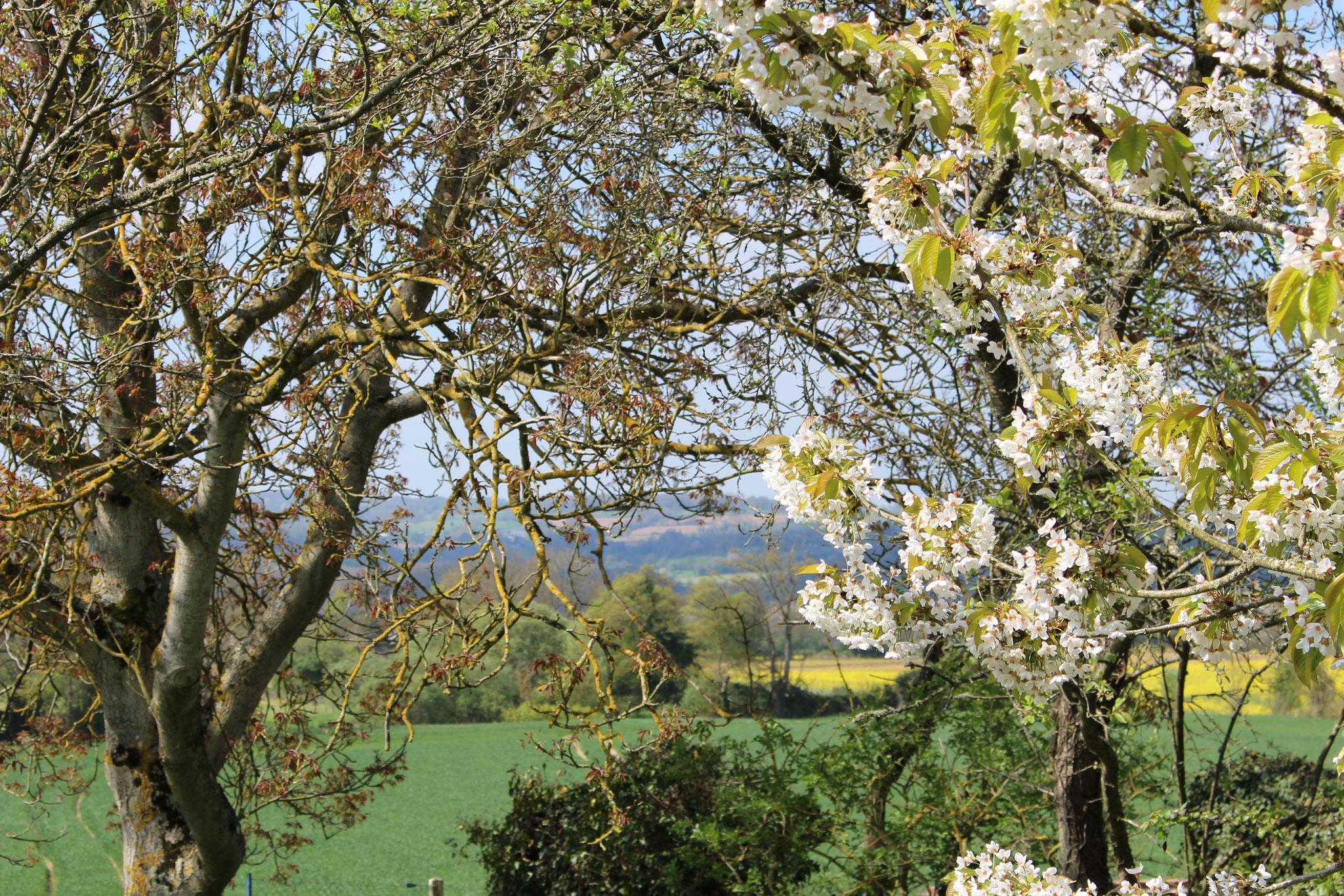 De notre jardin , vue sur les gorges de Saint-Aubert