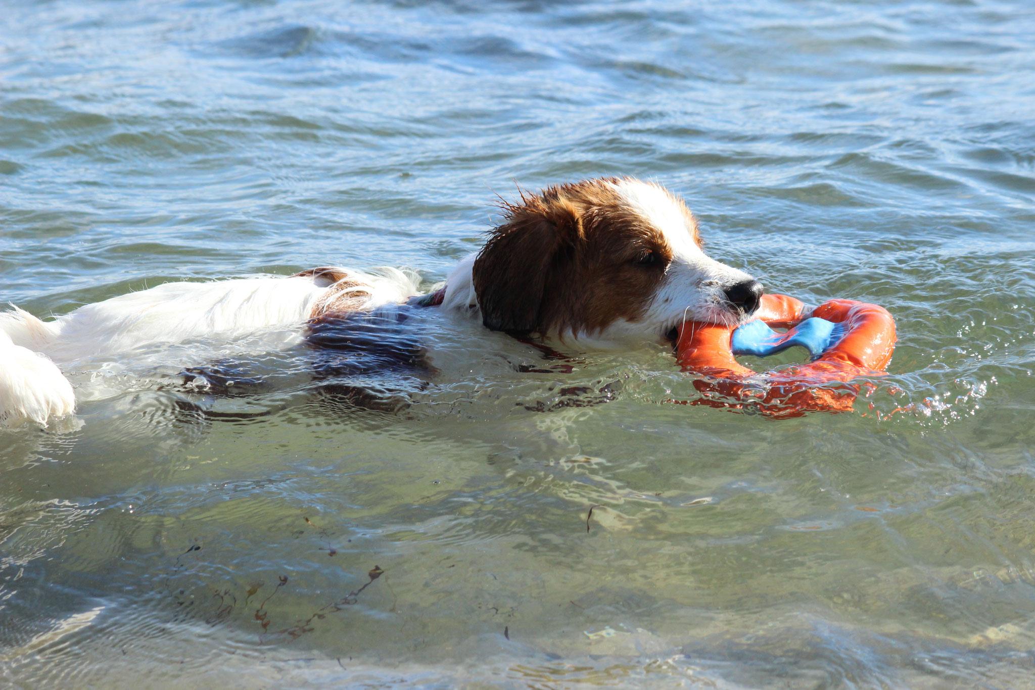 Schwimmversuche
