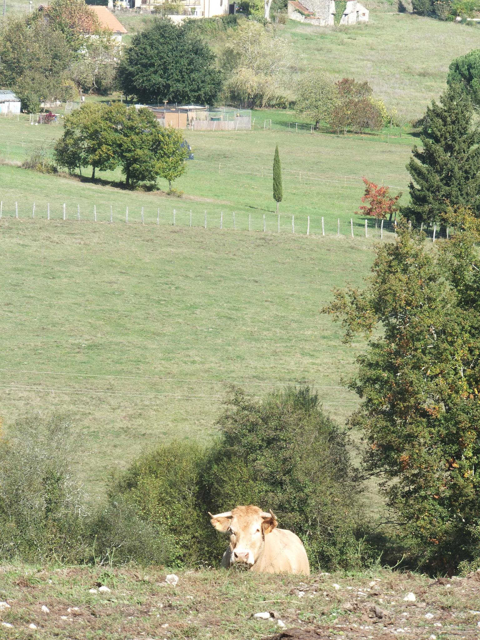 Vue depuis notre rue sur la campagne environnante à 300 m de chez nous