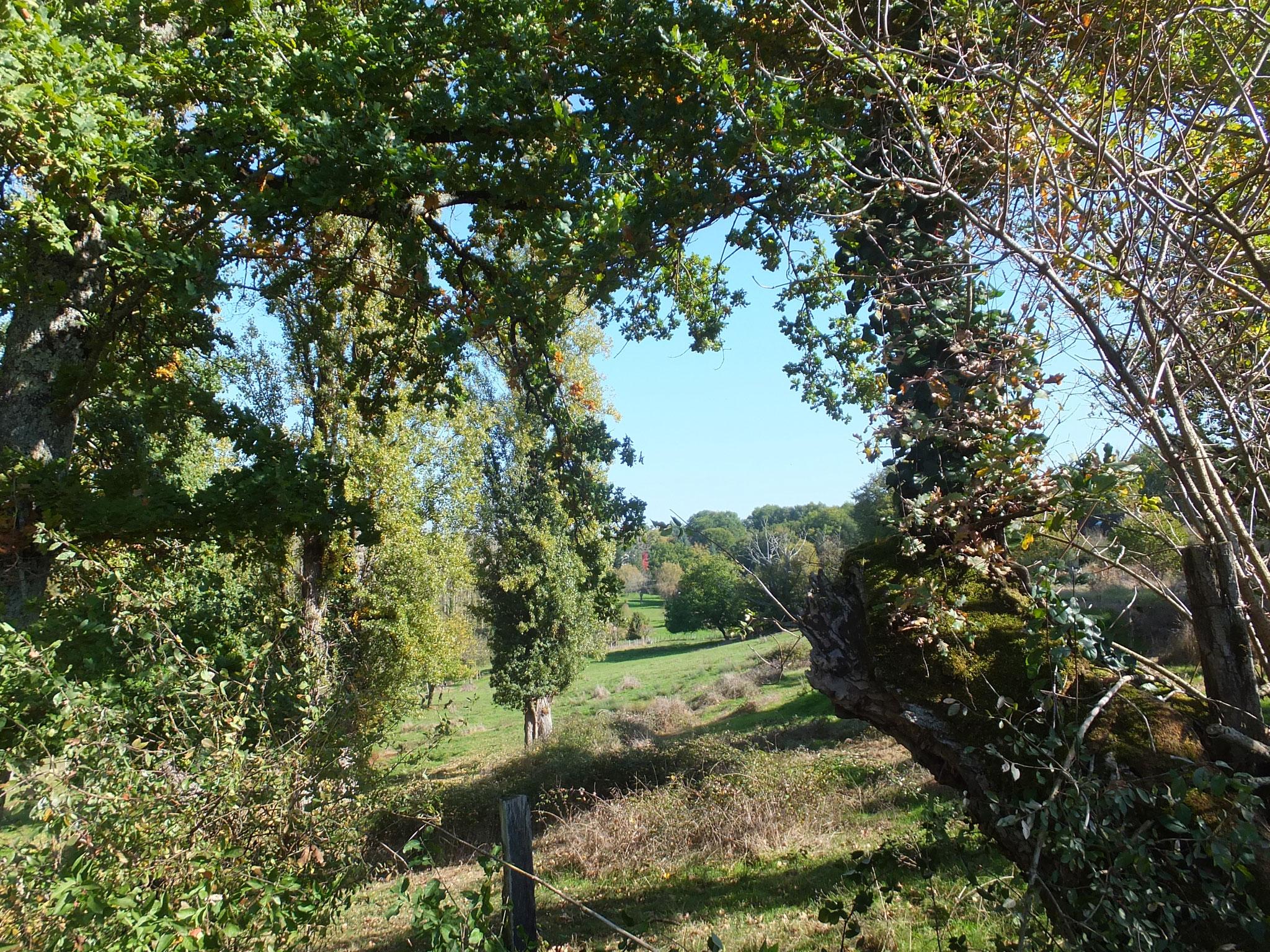 Petit sentier promenade qui rejoint le Chemin de Compostelle à 900 m de notre maison