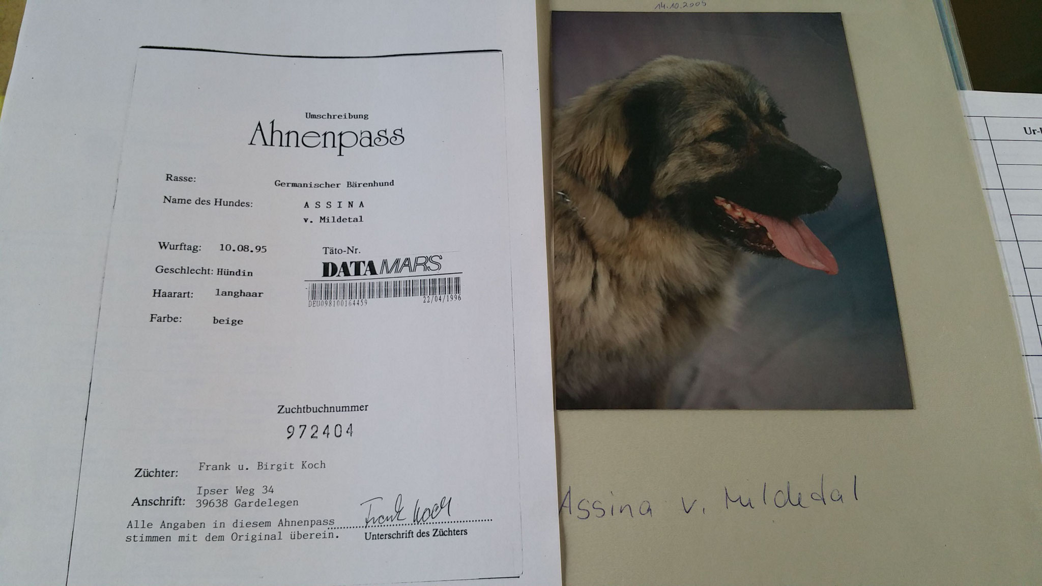Assinas Ahnentafel